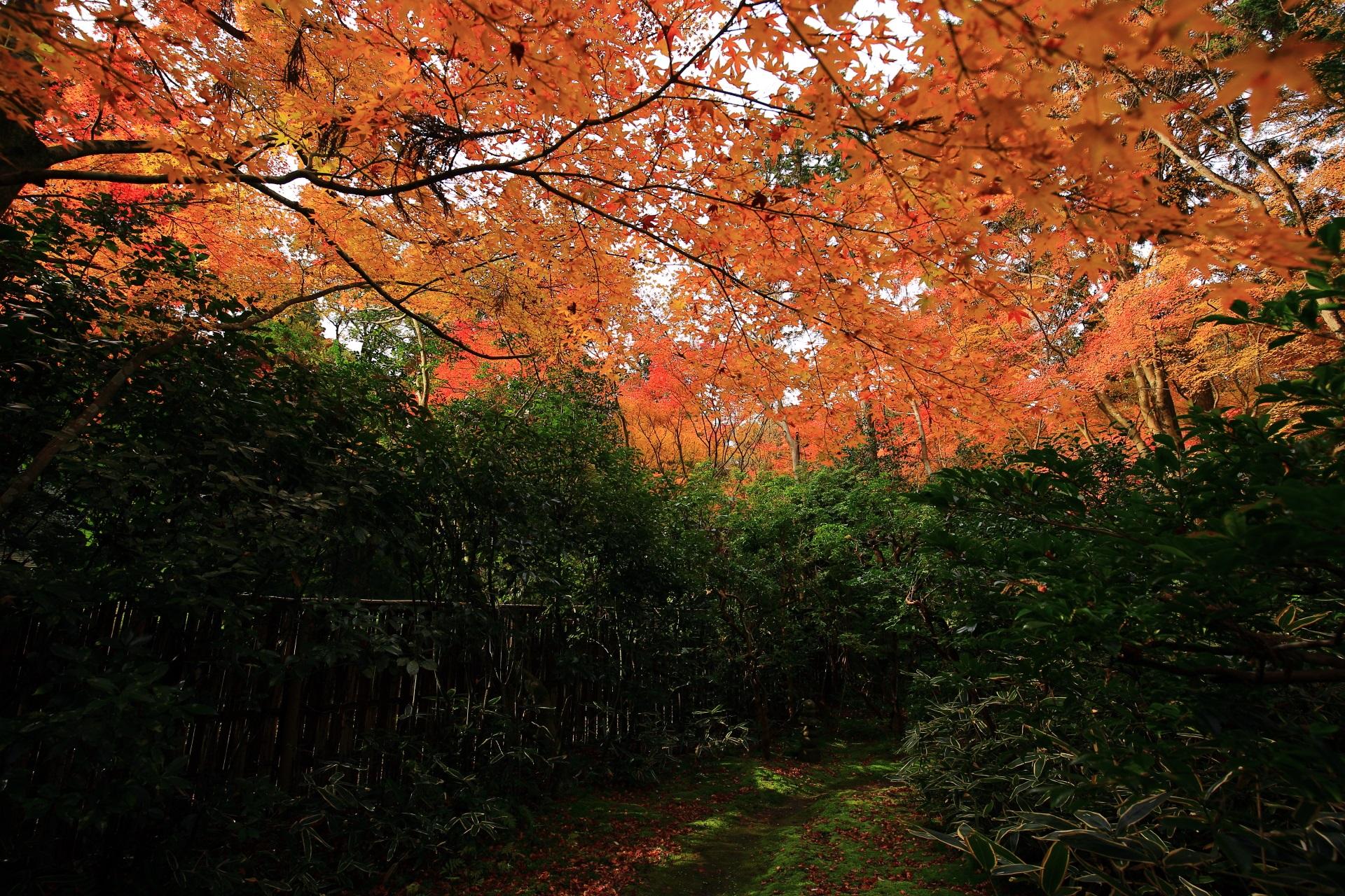淡い秋の空間が出来上がる来迎院の含翠庭