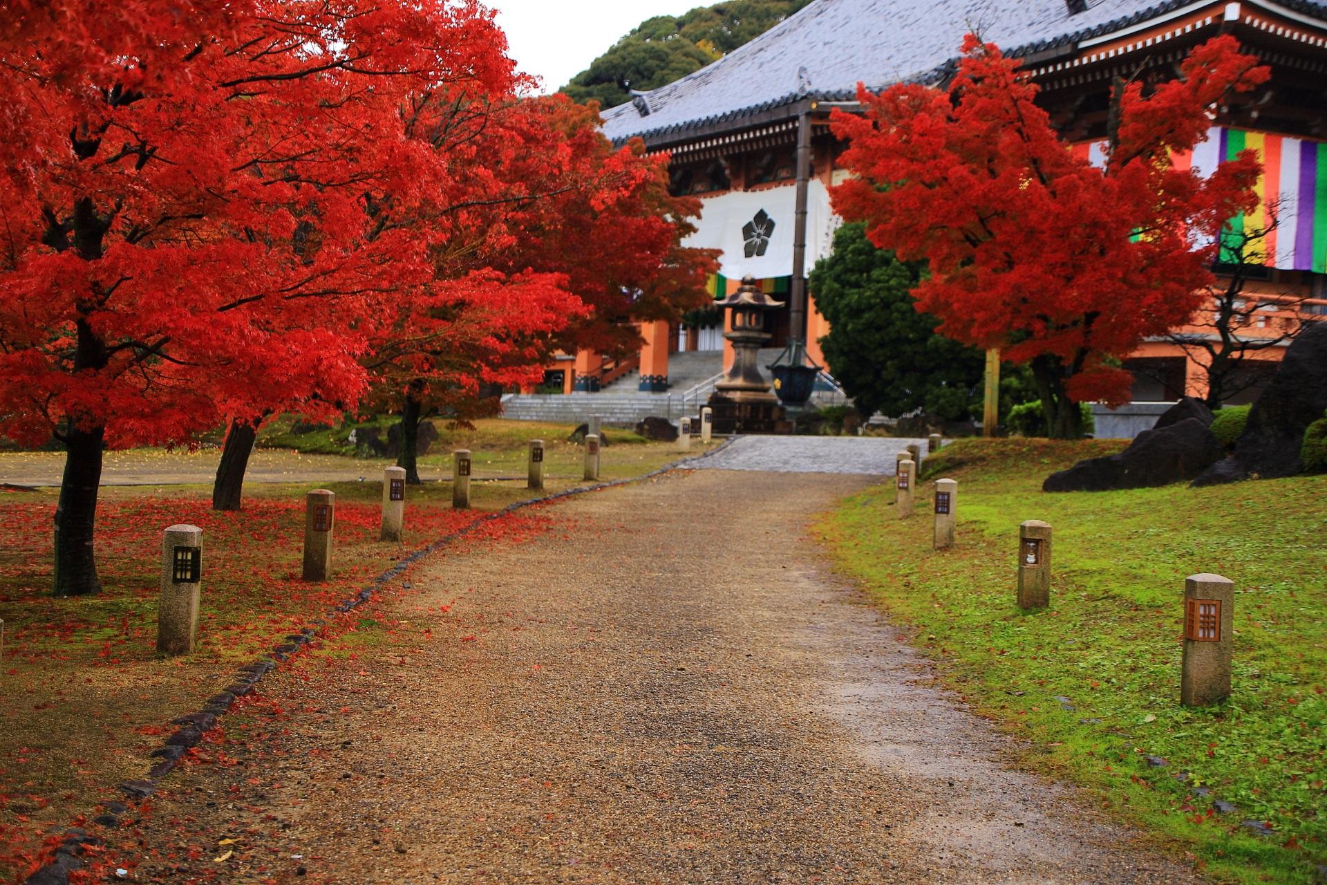 智積院の雄大な金堂を彩る燃えるような赤い紅葉