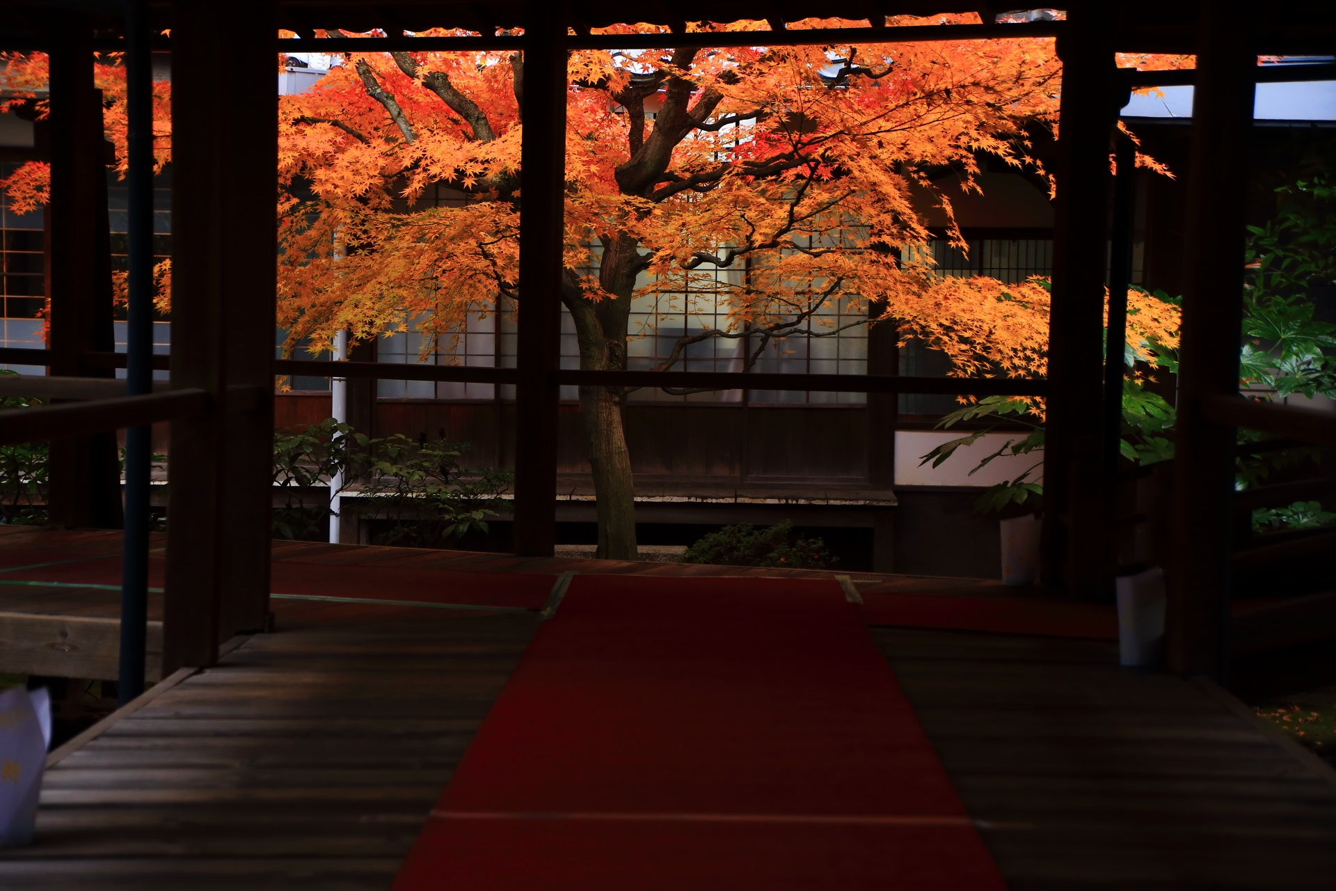 本法寺の秋を彩る絵になりすぎる絶品の紅葉