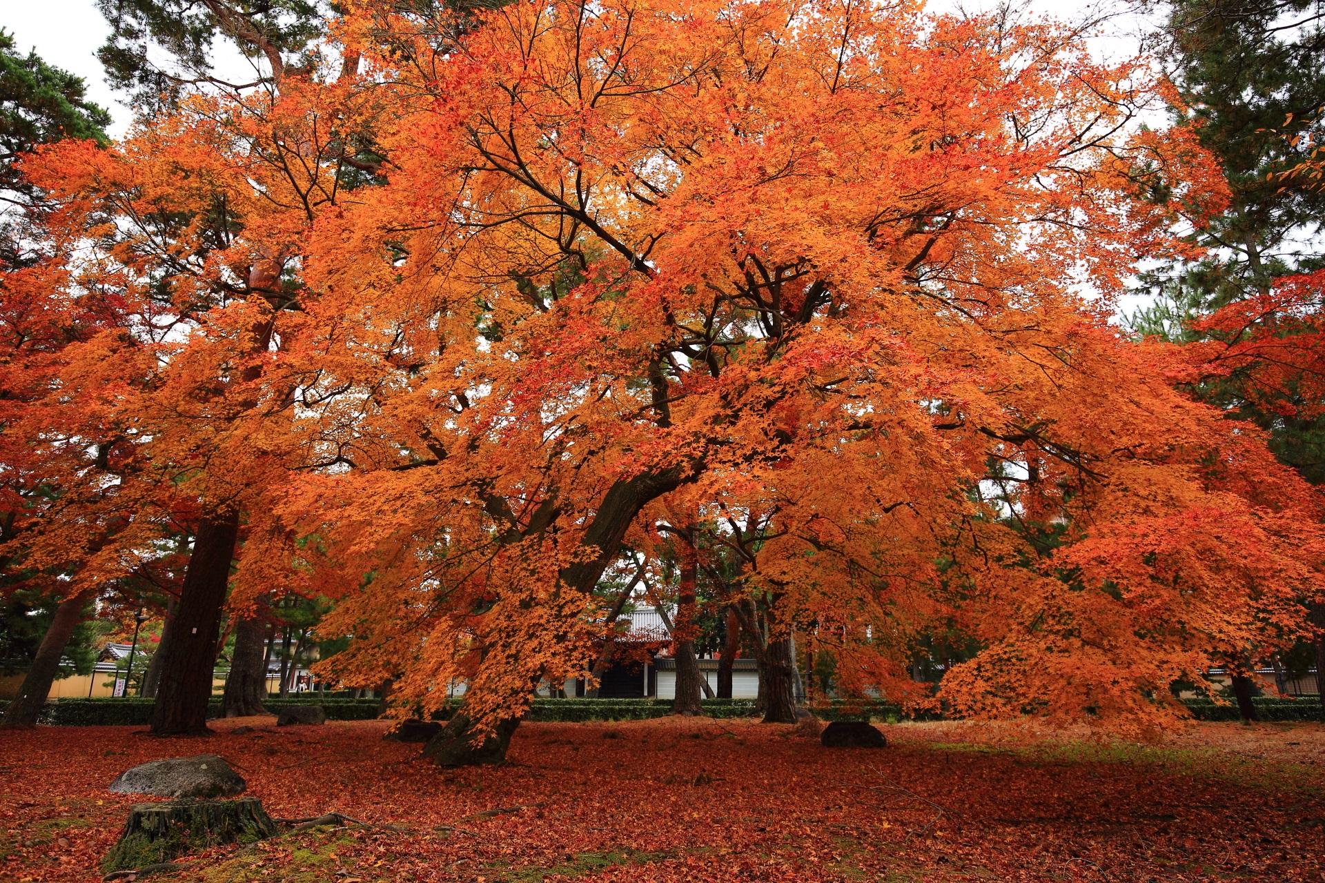 見事な秋色につつまれる相国寺