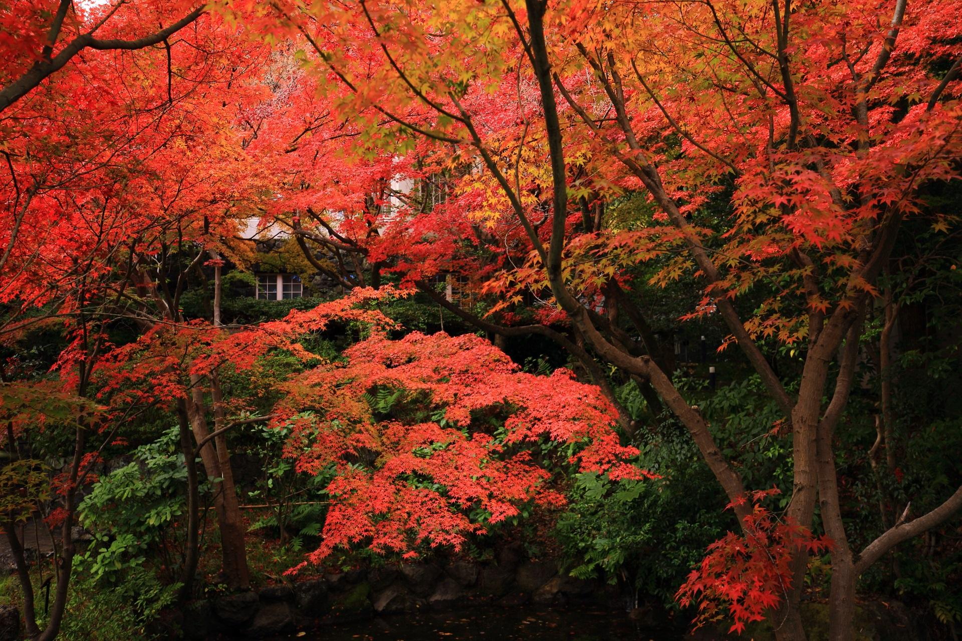 レトロで上品な建物を染める見事な紅葉