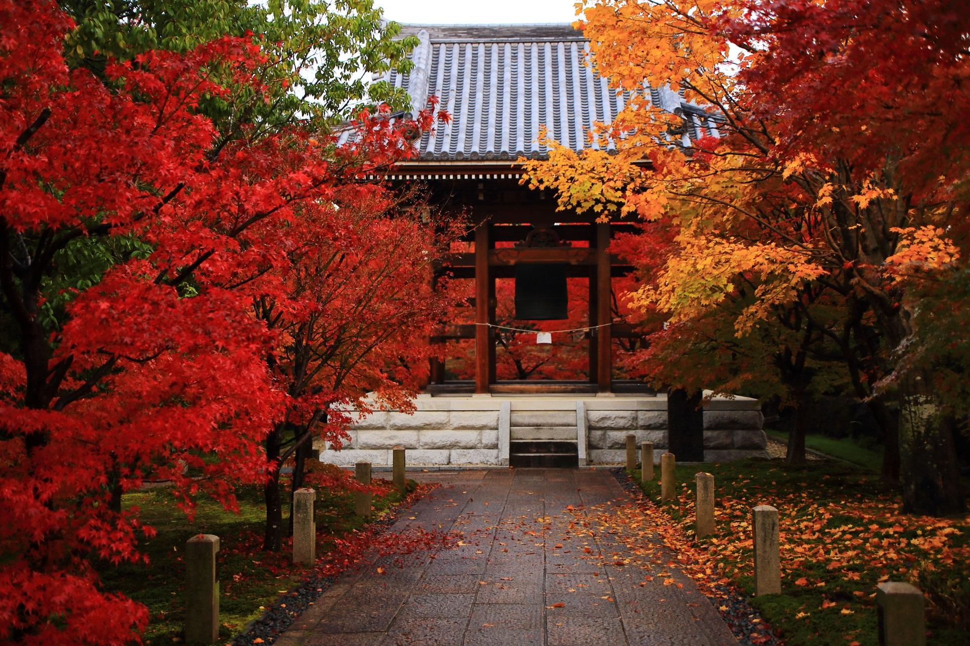 智積院の黄色い華やかな紅葉と赤い鮮やかな紅葉の綺麗なコントラスト
