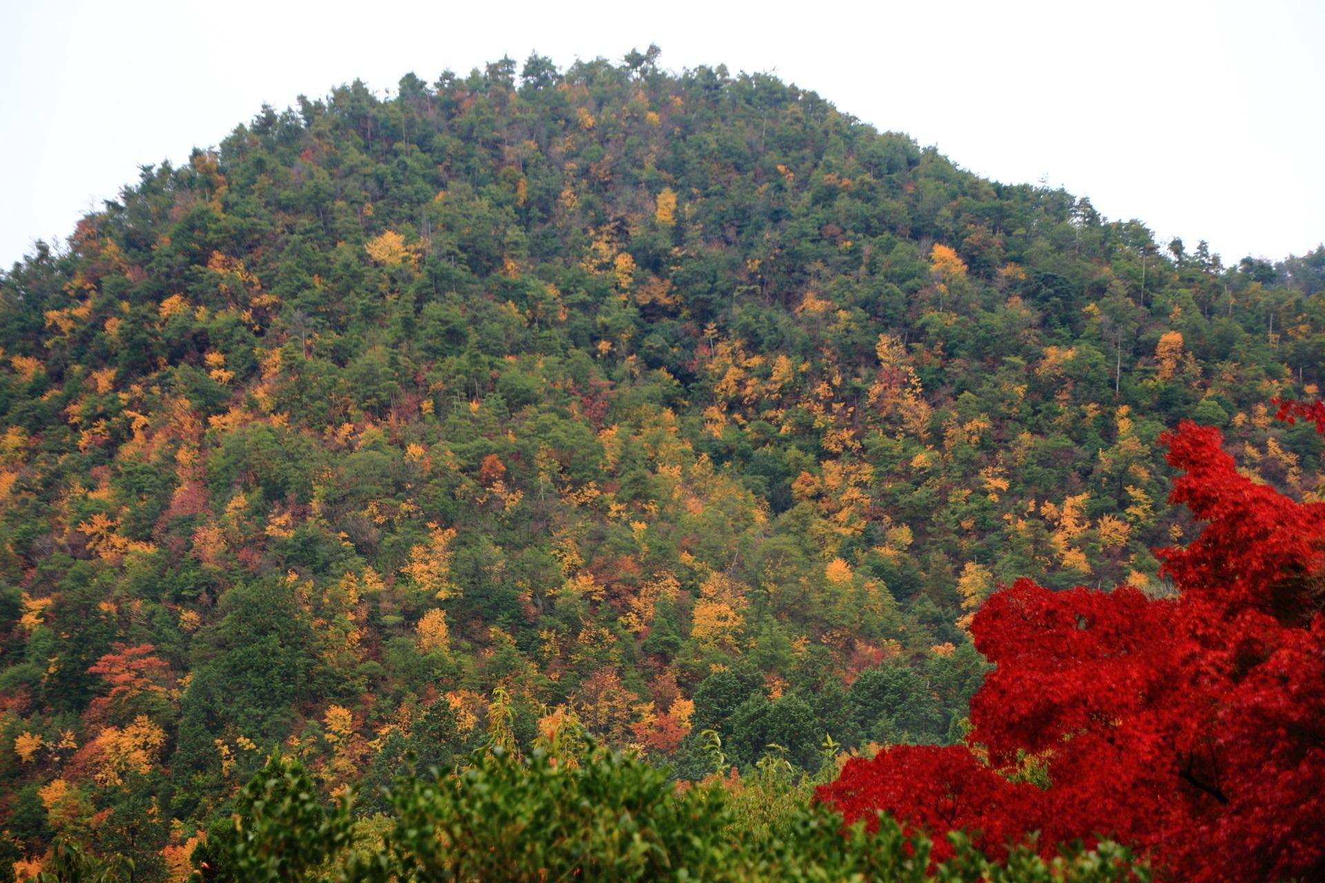 暖かな秋色につつまれる鷹が峰と燃えるような紅葉