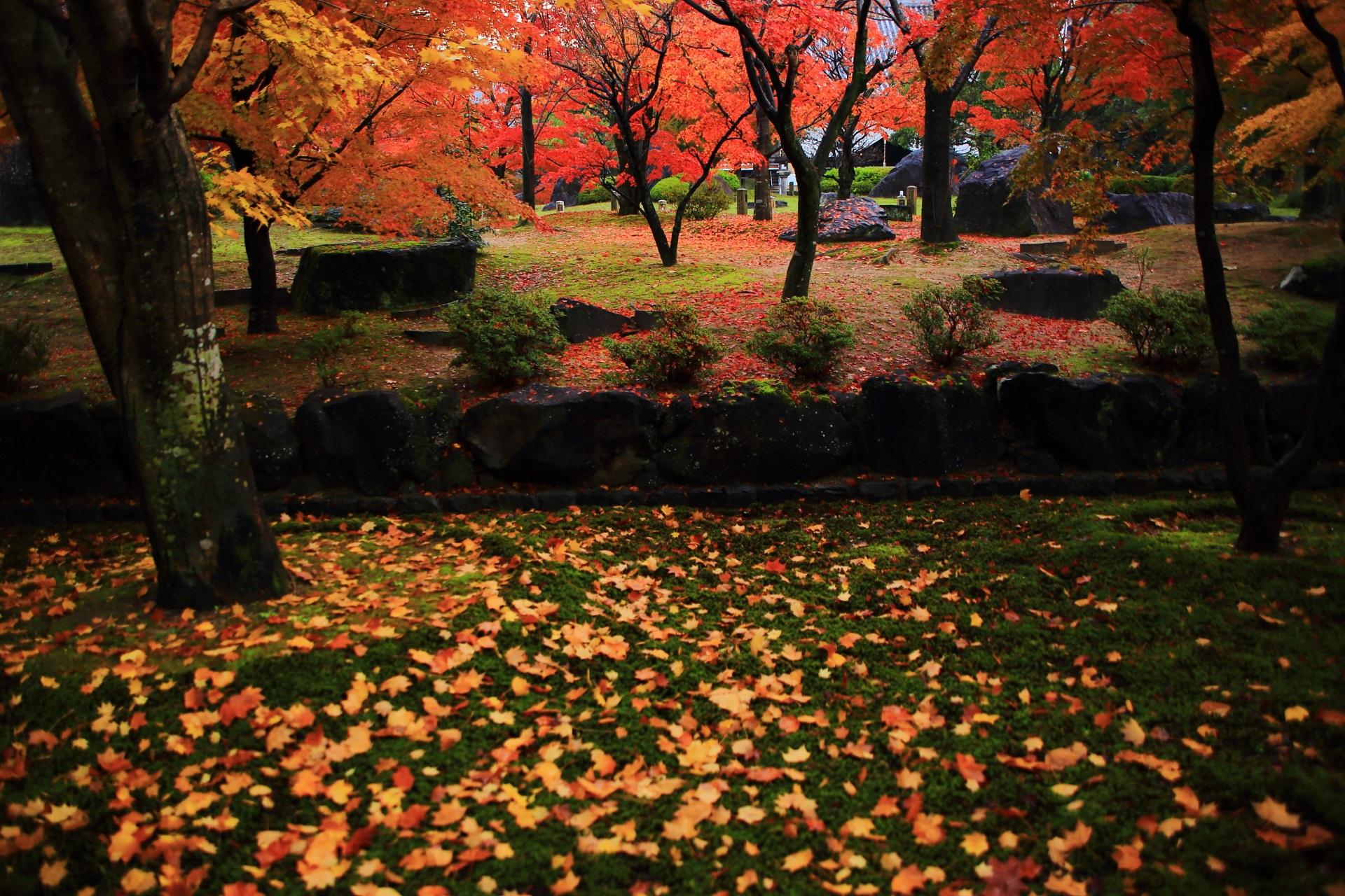 智積院の雨上がりの境内を染める色とりどりの紅葉や散りもみじ