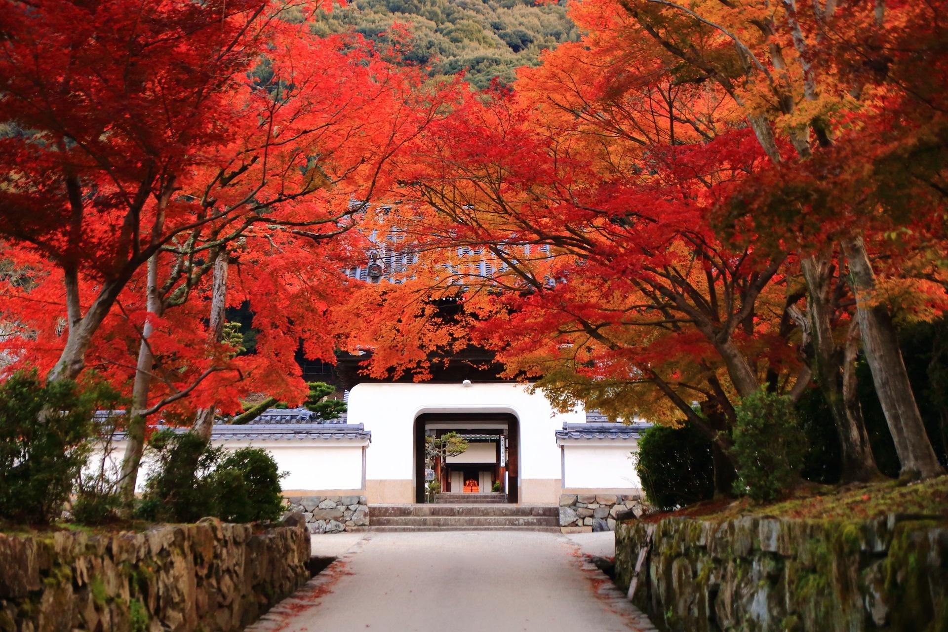 興聖寺の龍宮門を彩る琴坂の絶品の紅葉