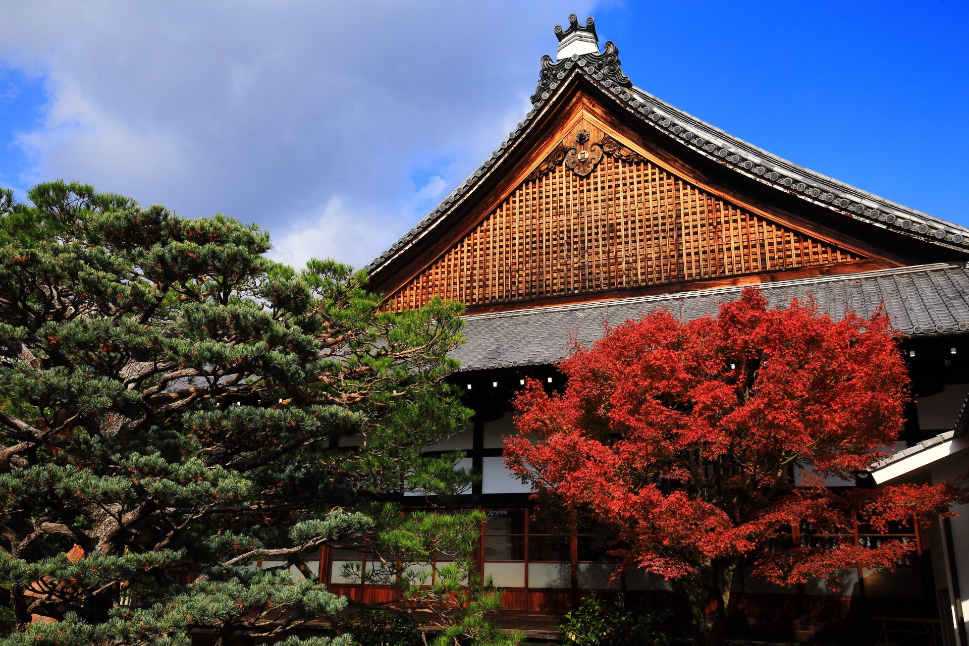 青空と本堂を背景にした妙覚寺の五葉の松と見ごろの紅葉
