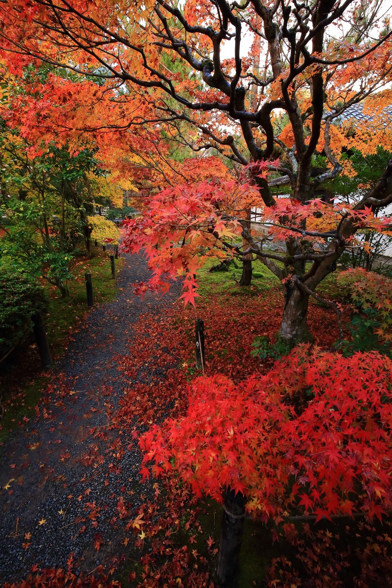 雨に美しさを引き立てられた紅葉