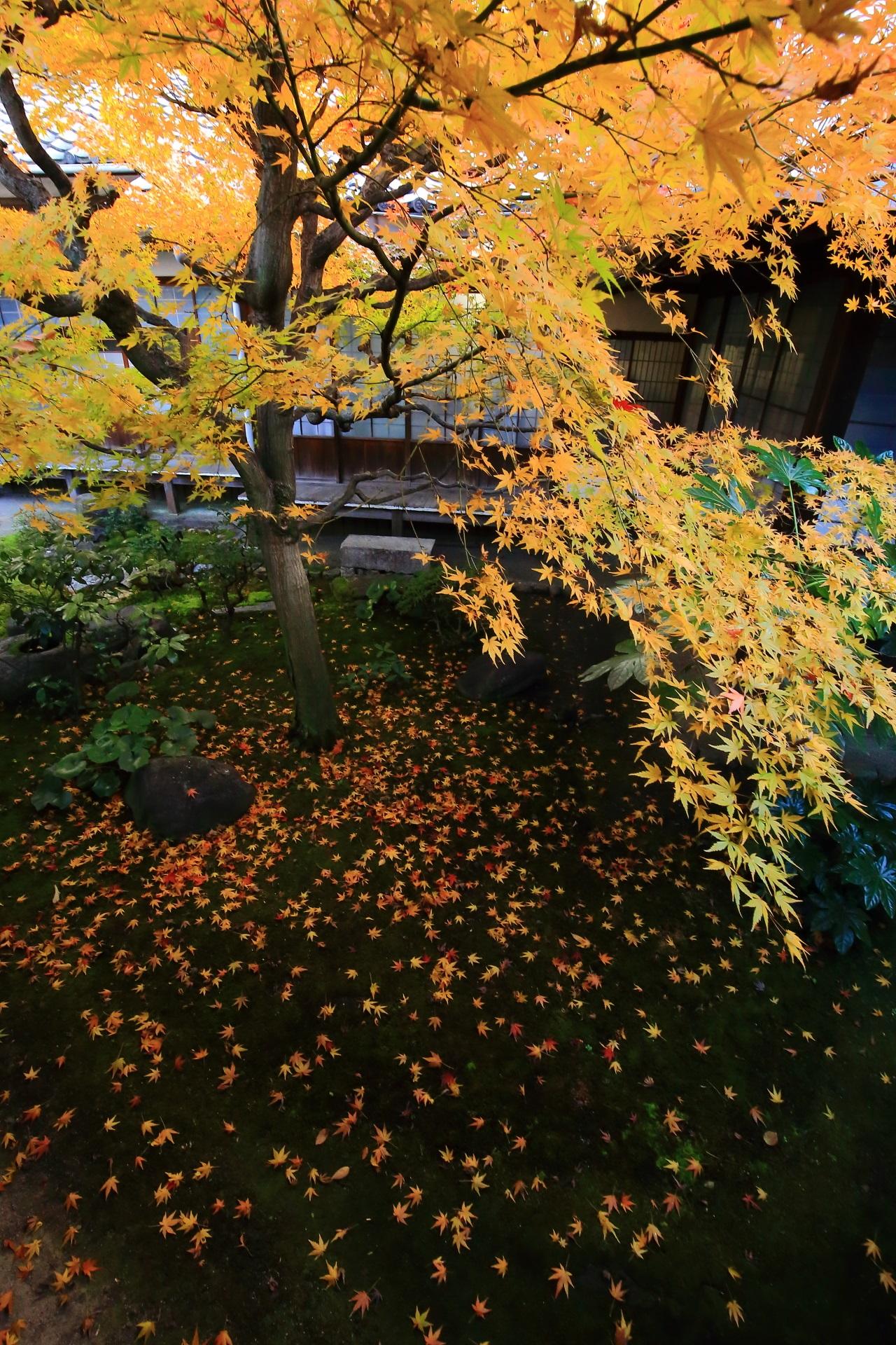 華やかで見事な紅葉と散り紅葉に染まる秋の本法寺