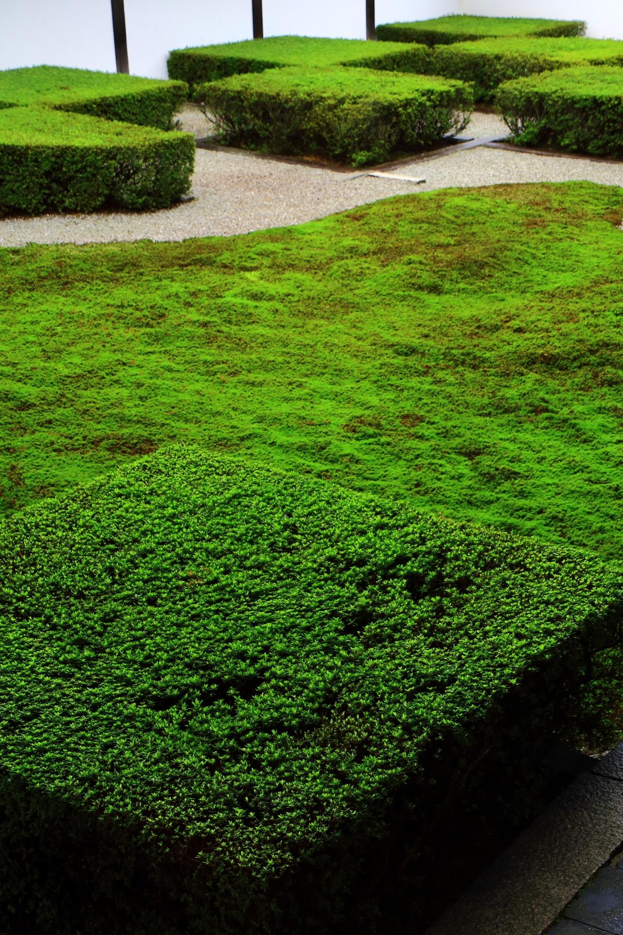 斬新なサツキの刈り込みの方丈庭園