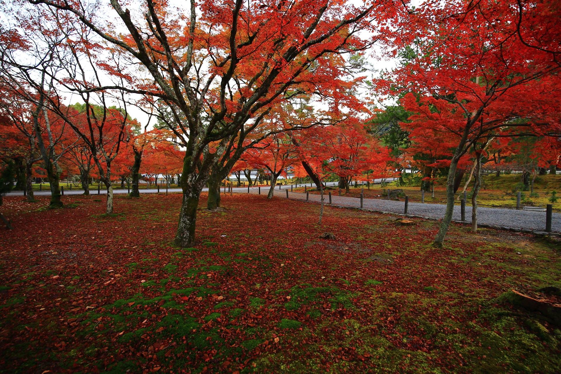 南禅寺の鮮やかな見ごろの紅葉と緑の苔を覆う散りもみじ