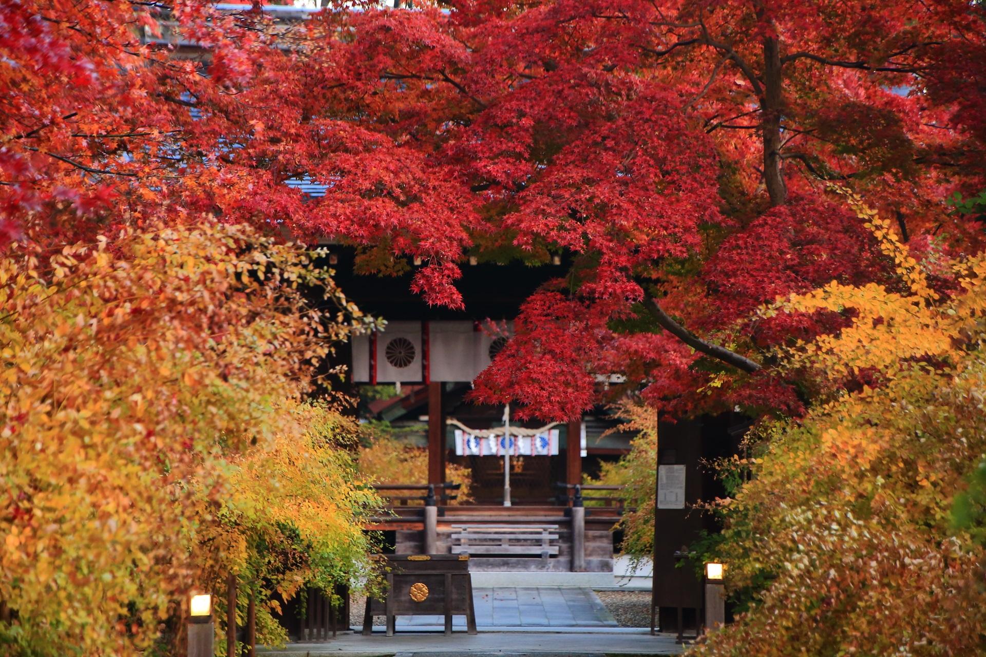 梨木神社の真っ赤な紅葉に染まる神門と奥に見える拝殿と本殿