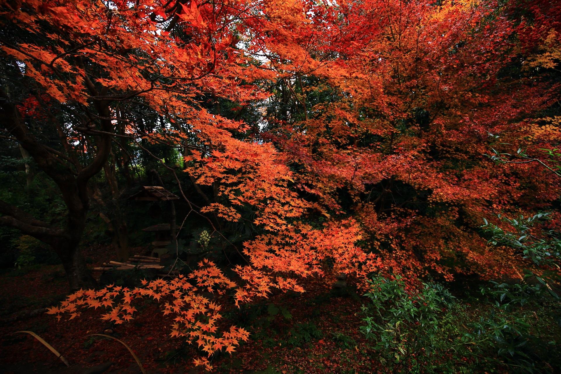晩秋を優雅に彩る紅葉