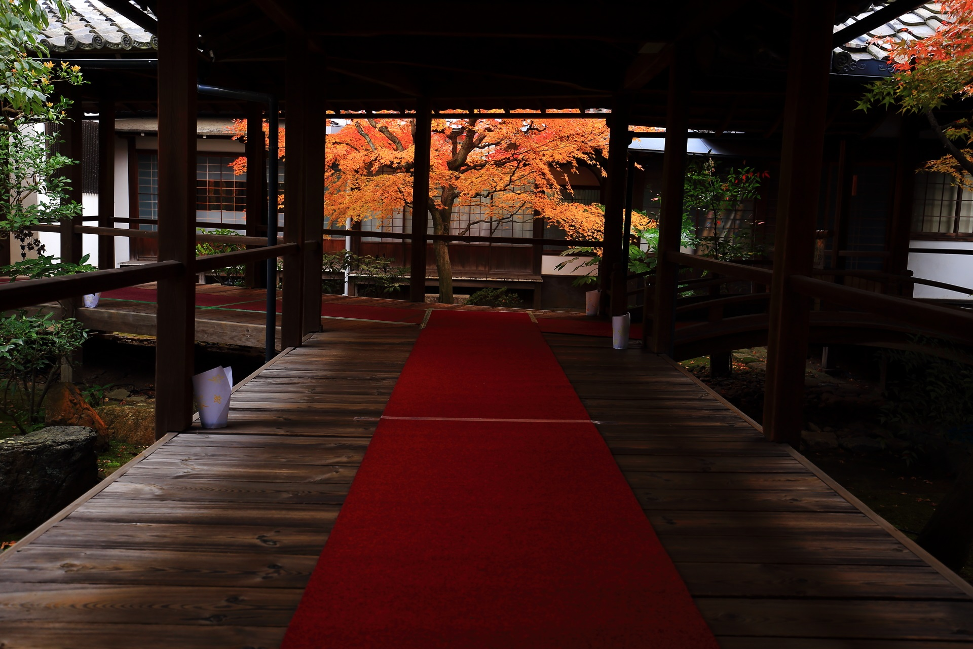 本法寺の見事な紅葉と風情ある情景