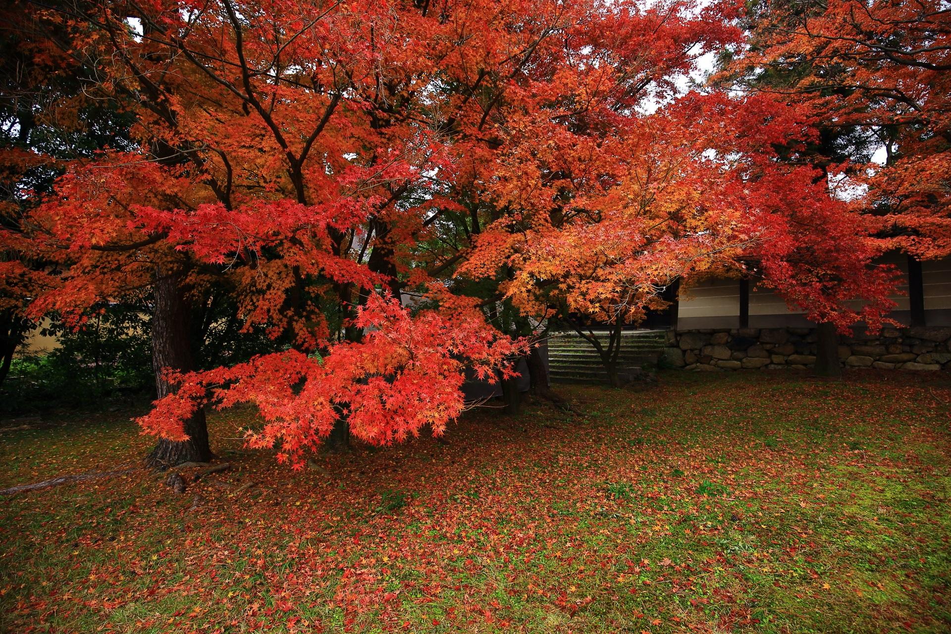 勅使門を彩る鮮やかな紅葉