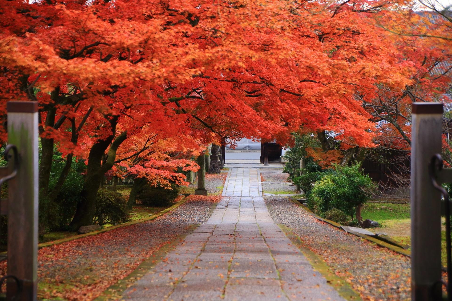 養源院の玄関前から眺めた絶品の紅葉の参道