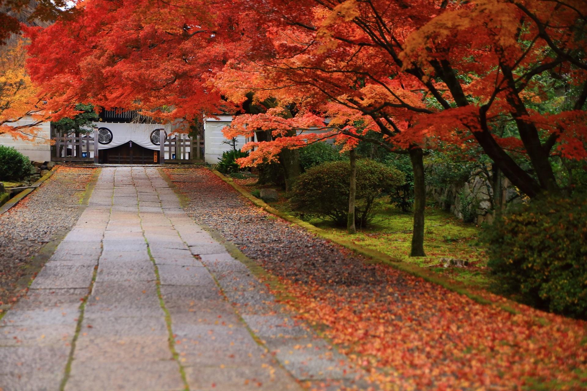 養源院の玄関と参道を染める溢れる紅葉とほのかな散り紅葉