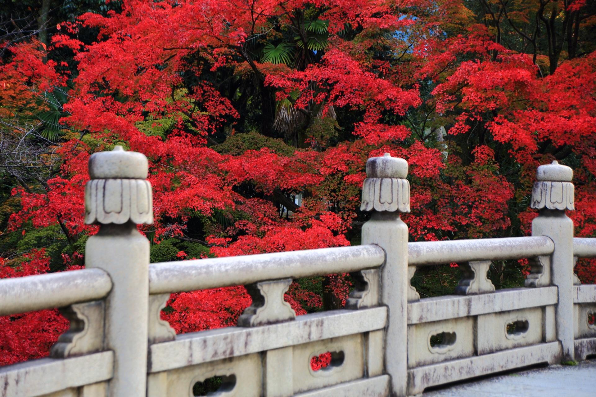 高画質 写真 大谷本廟 紅葉