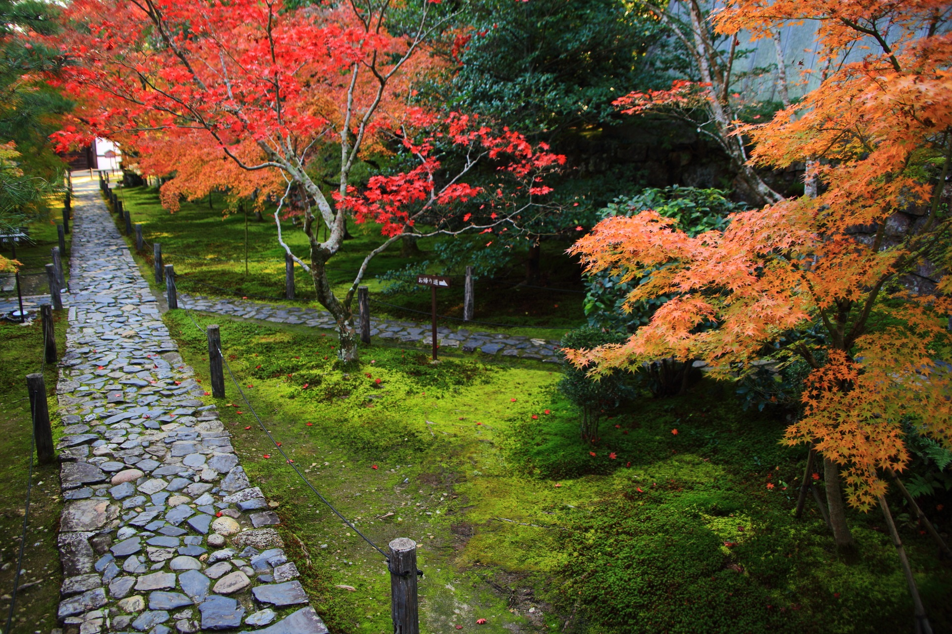中門側から眺めた参堂の紅葉と苔
