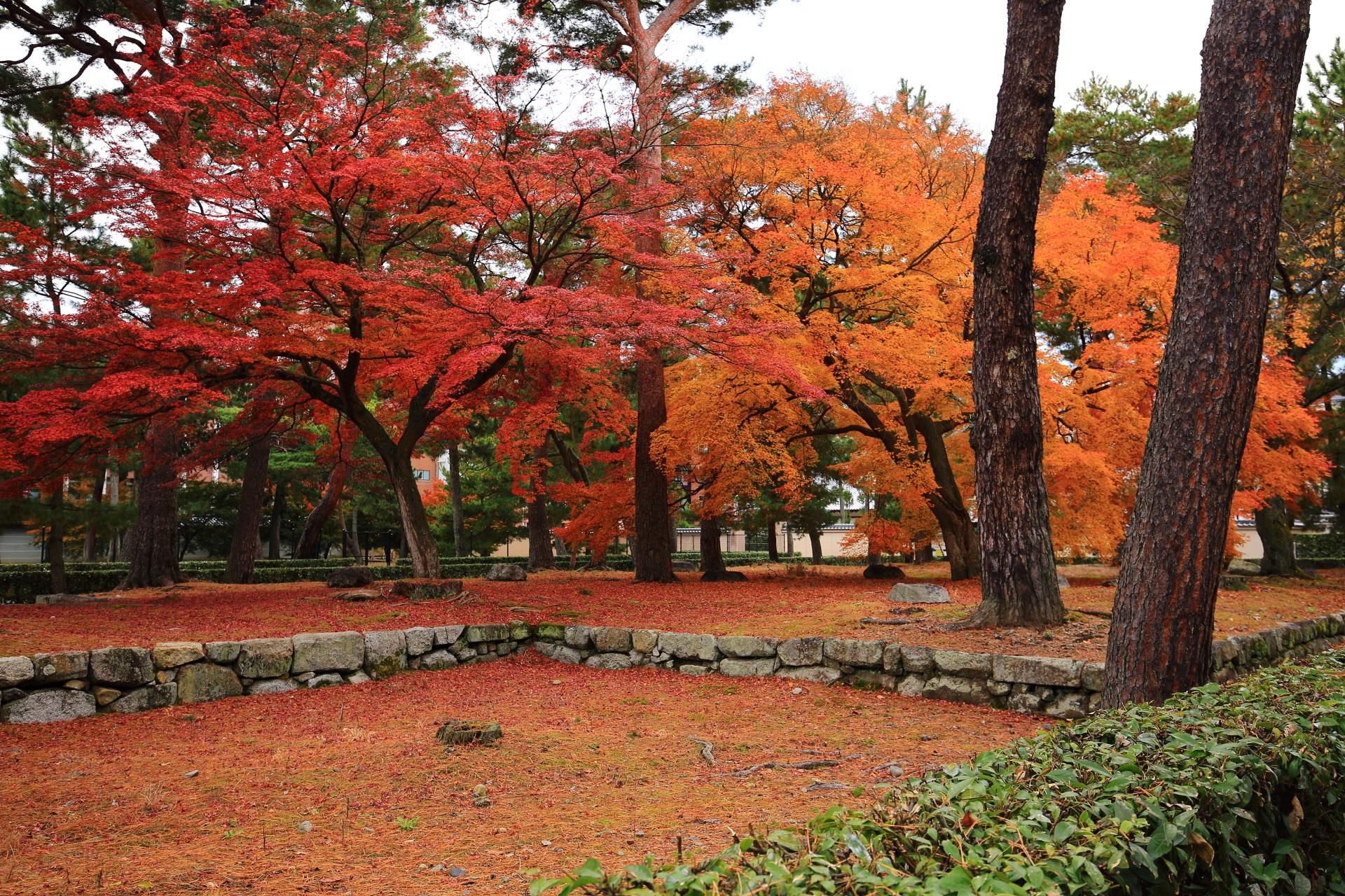 更に深く色づく雄大な紅葉