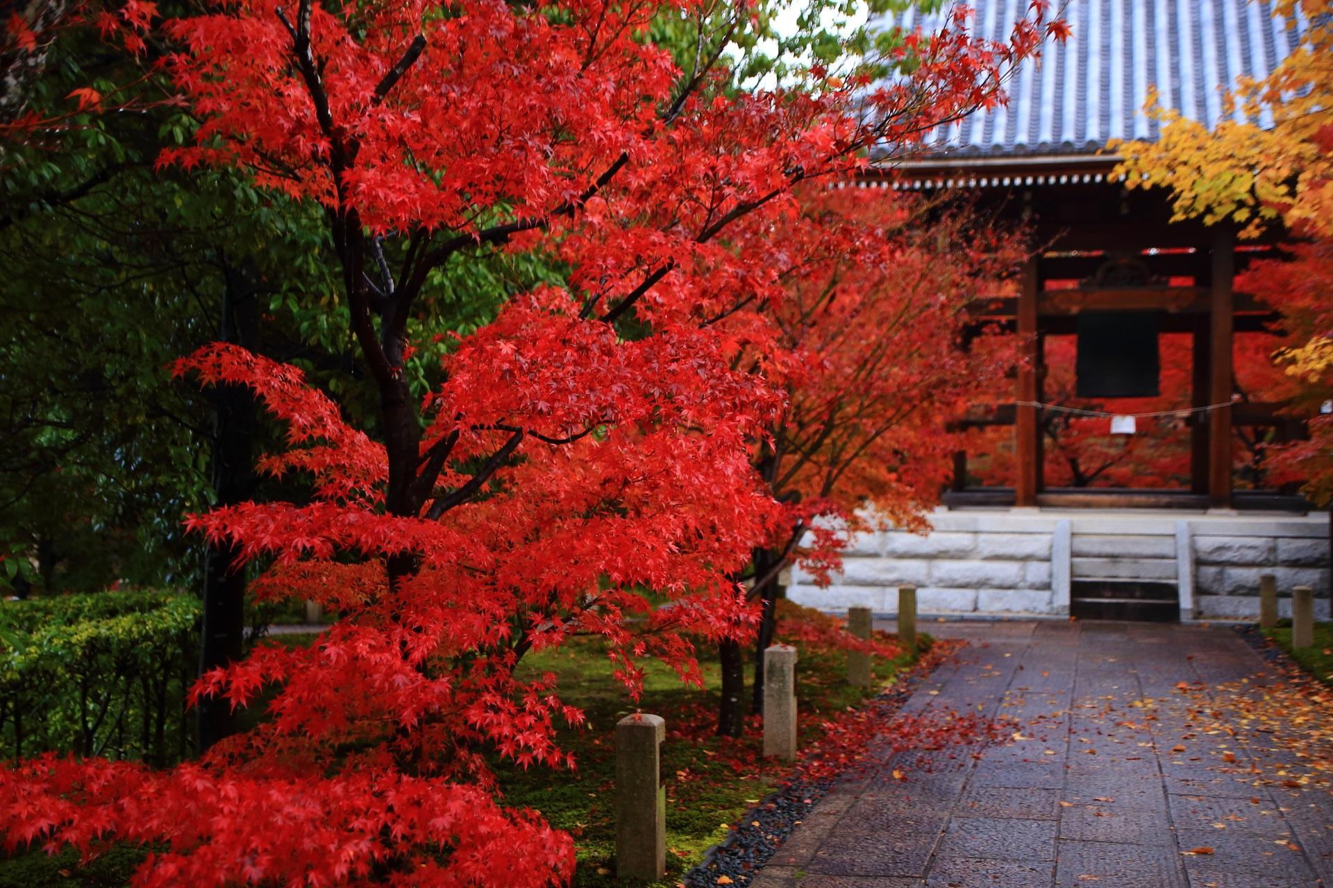 智積院の雨でしっとりとした真紅の紅葉