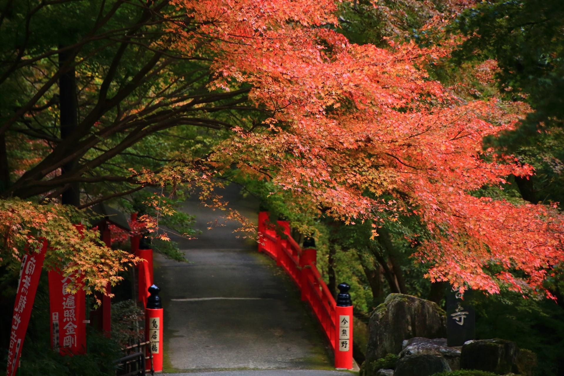 ほのかに色づく鳥居橋の紅葉