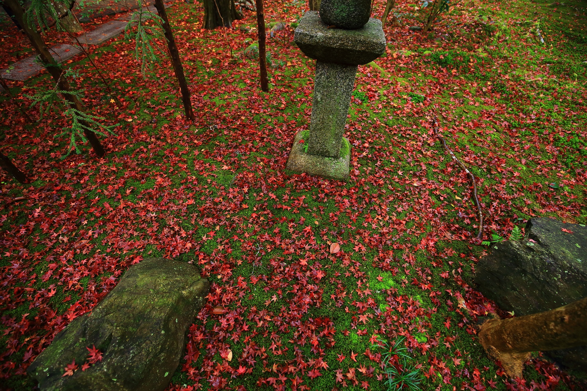 燈籠の廻りの一面の散り紅葉