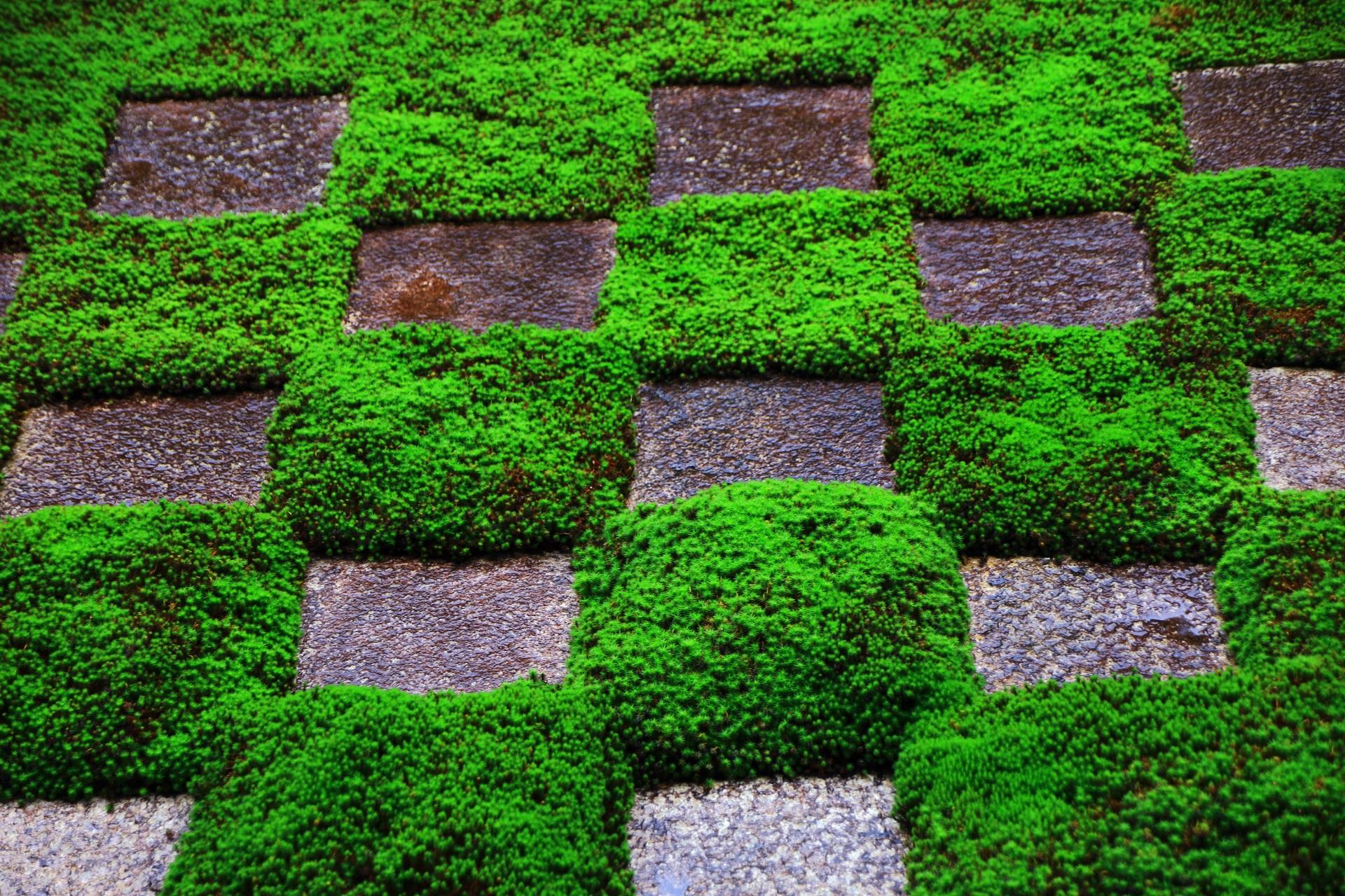 東福寺方丈北庭の苔の市松模様
