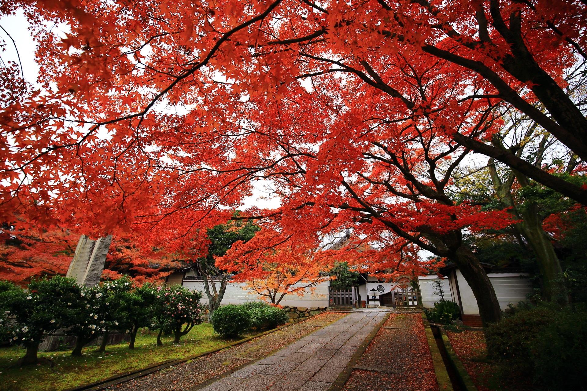 空を覆う雄大な紅葉と秋色の天井