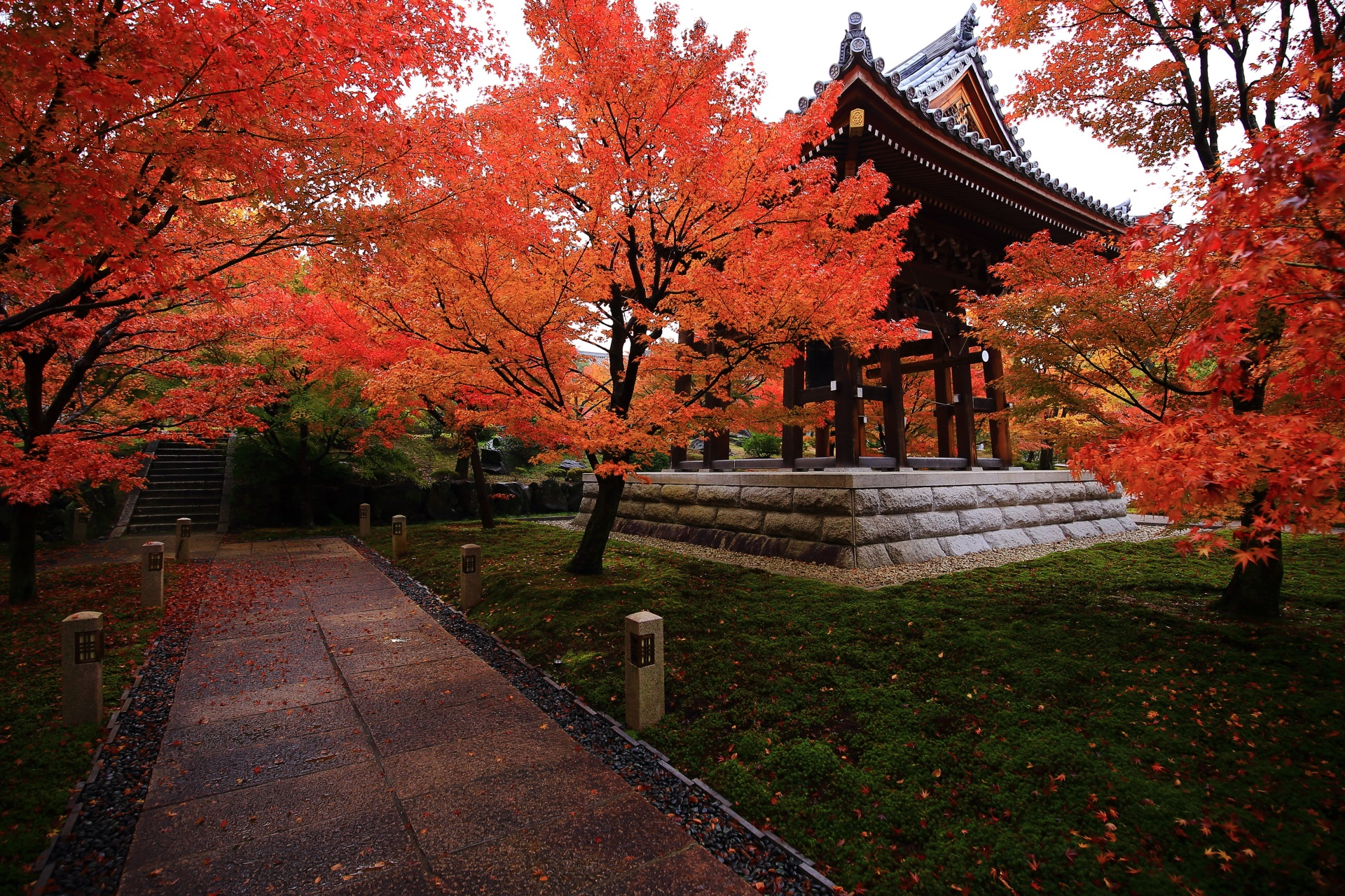 智積院の緑の苔と鐘楼を華やぐ絶品の紅葉