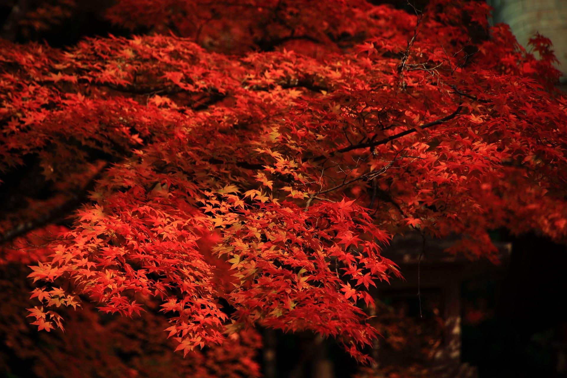 発色の良い赤やオレンジの紅葉