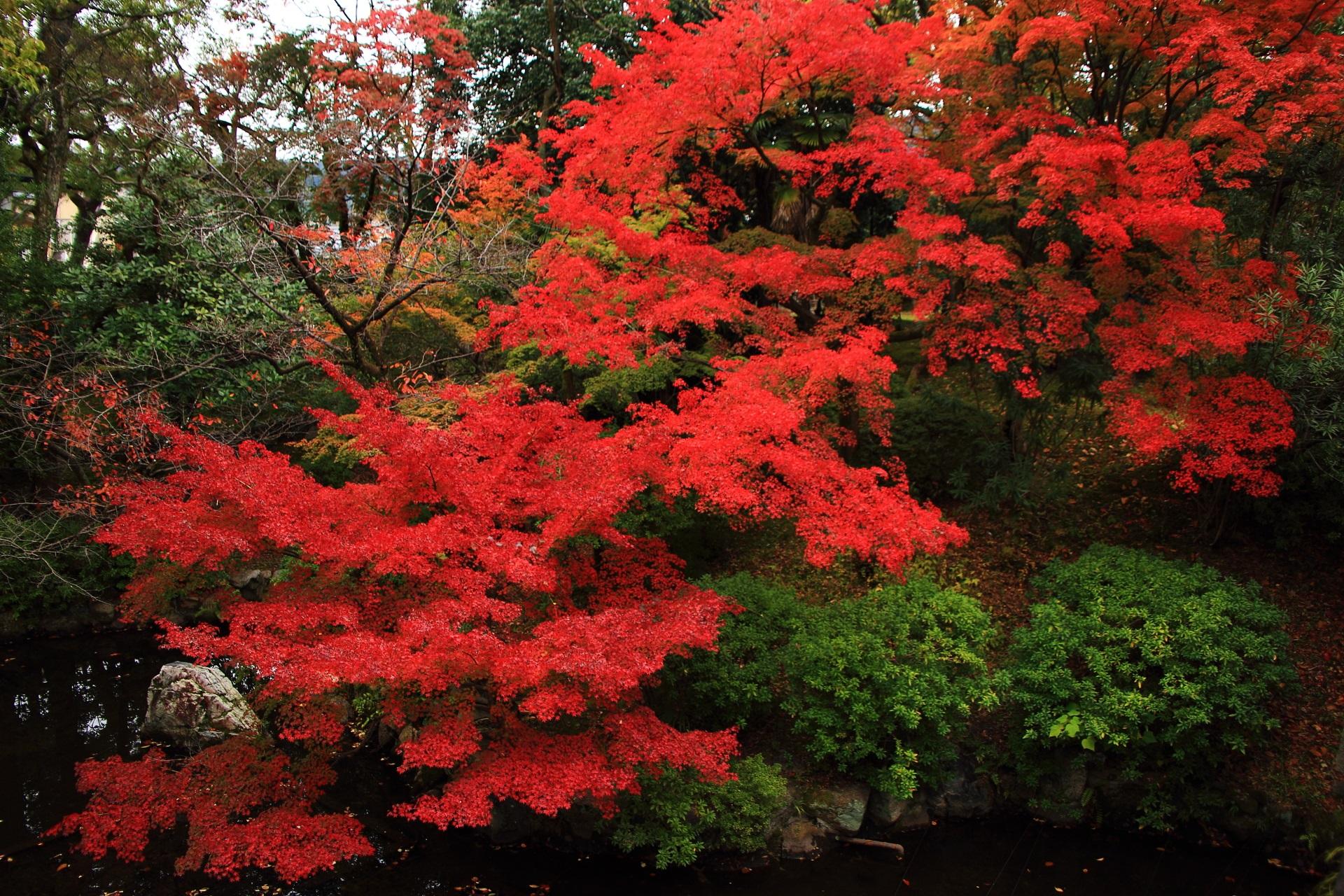 大谷本廟の炎のような圧倒的な紅葉