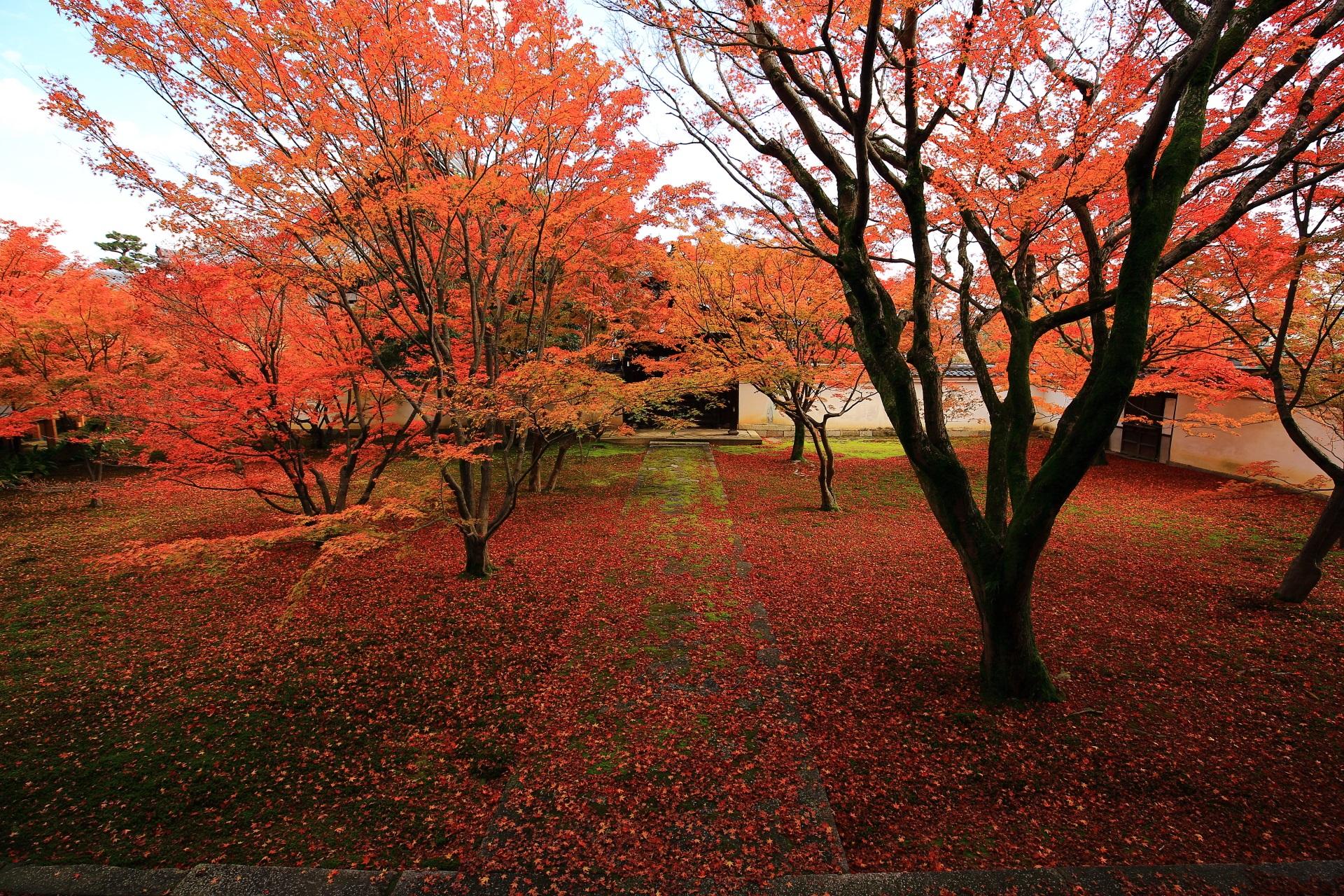 妙覚寺の見事な秋色の空間