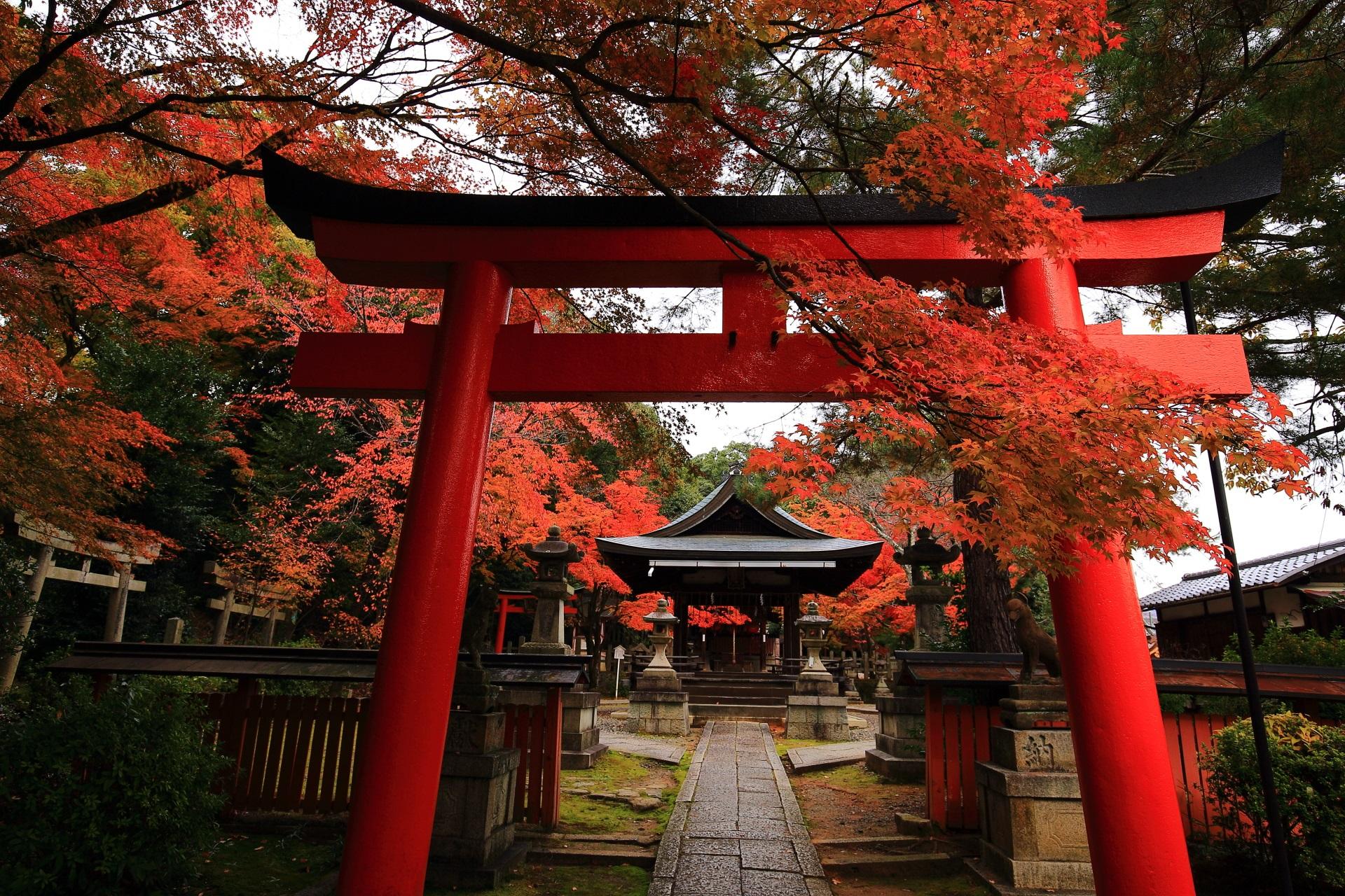 竹中稲荷神社の長い鳥居の参道の奥に佇む拝殿と鮮やかな紅葉