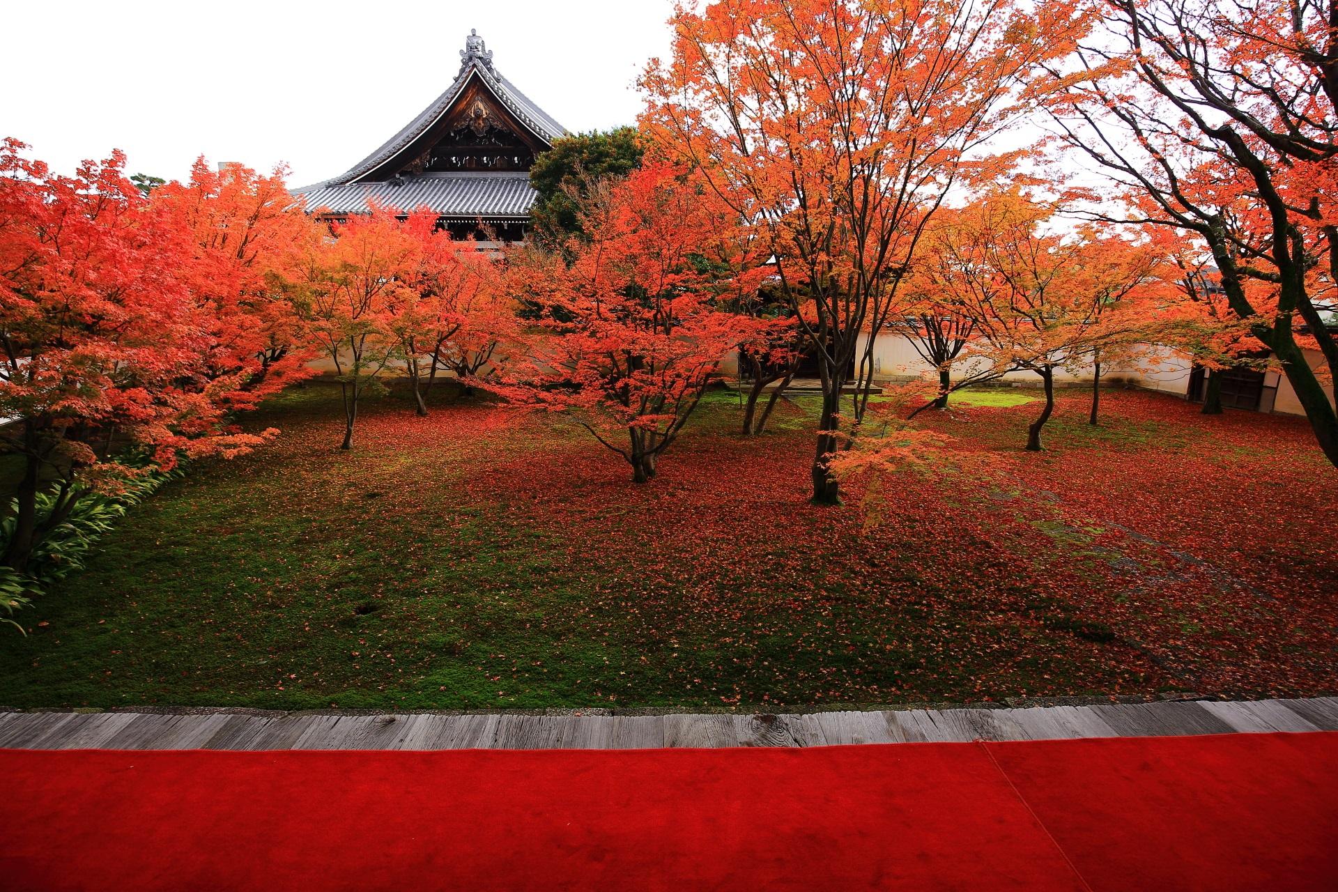 妙覚寺の祖師堂を背景にした本堂前庭園の紅葉
