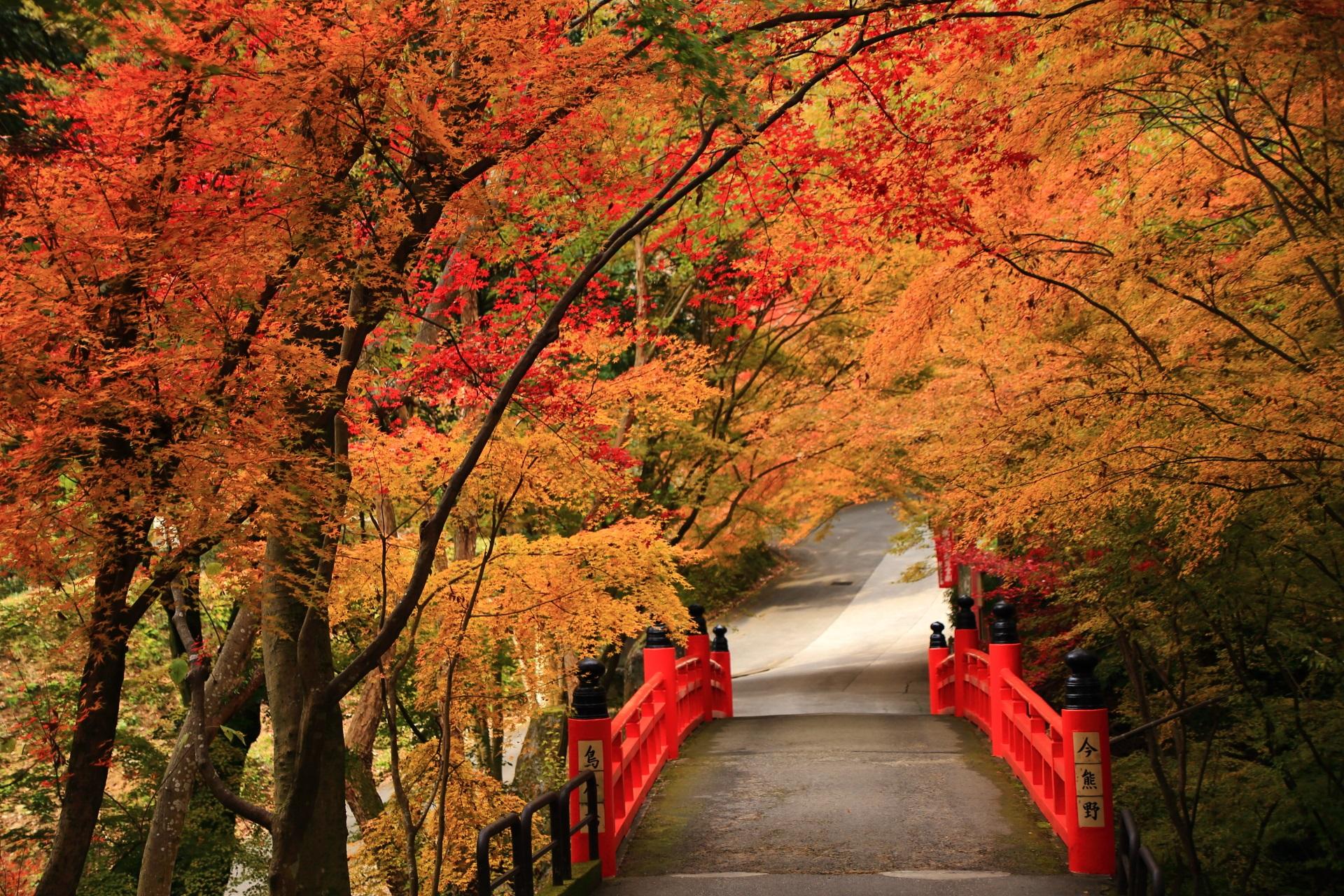 見事な秋色につつまれた逆(今熊野観音寺の境内側)から眺めた鳥居橋
