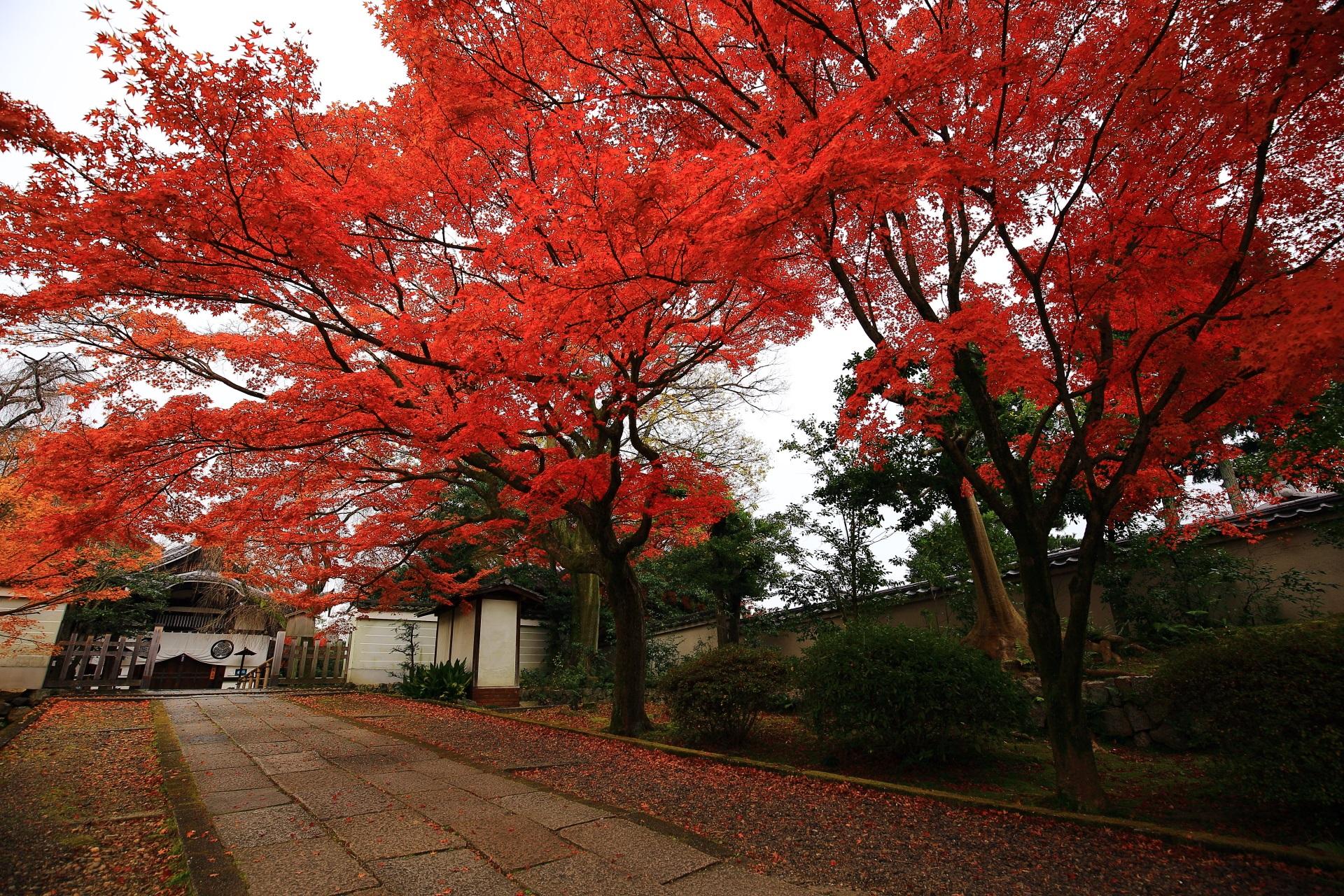 養源院の玄関前の華やぐ鮮やかな紅葉