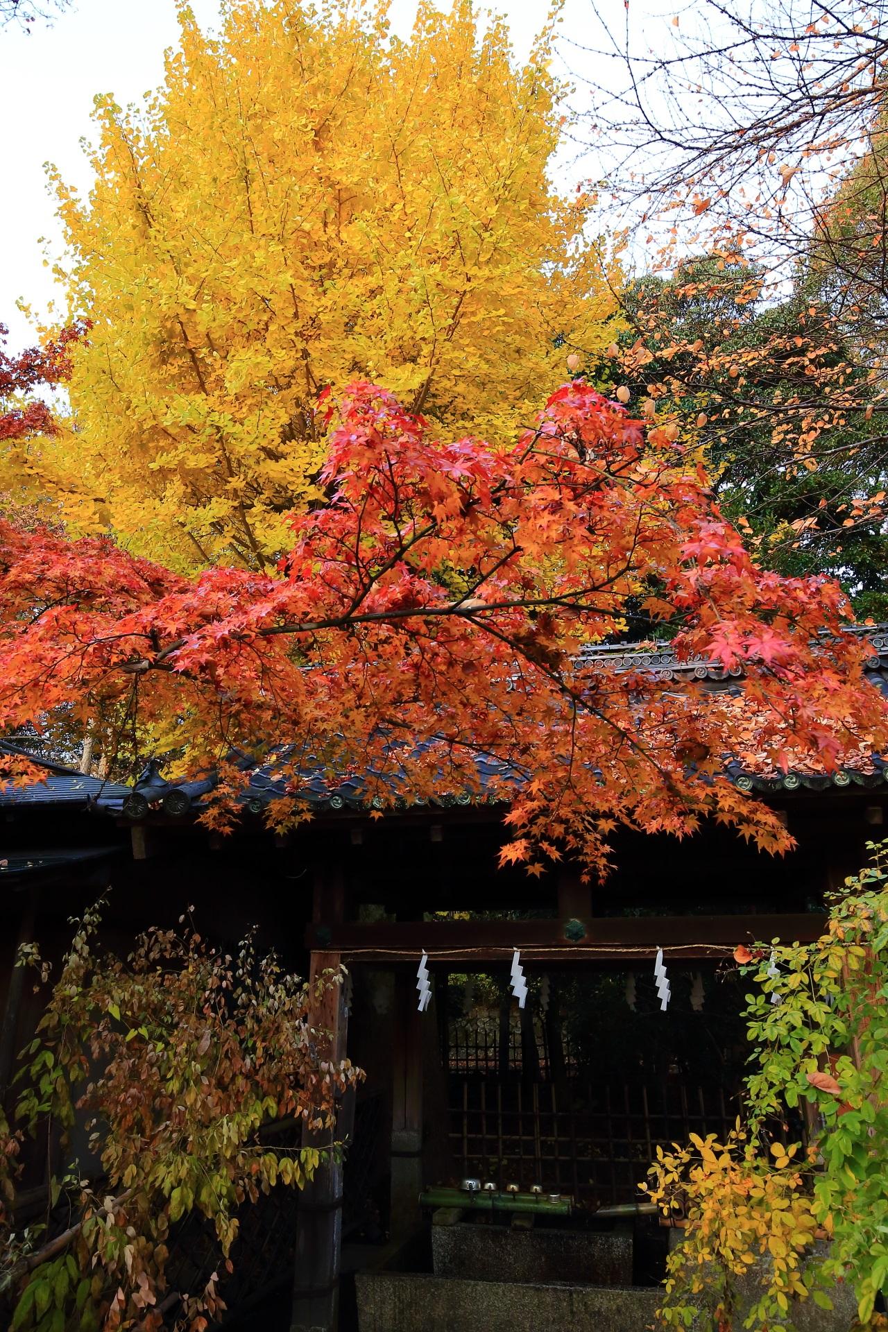 梨木神社の多彩な秋の彩りや染井の水