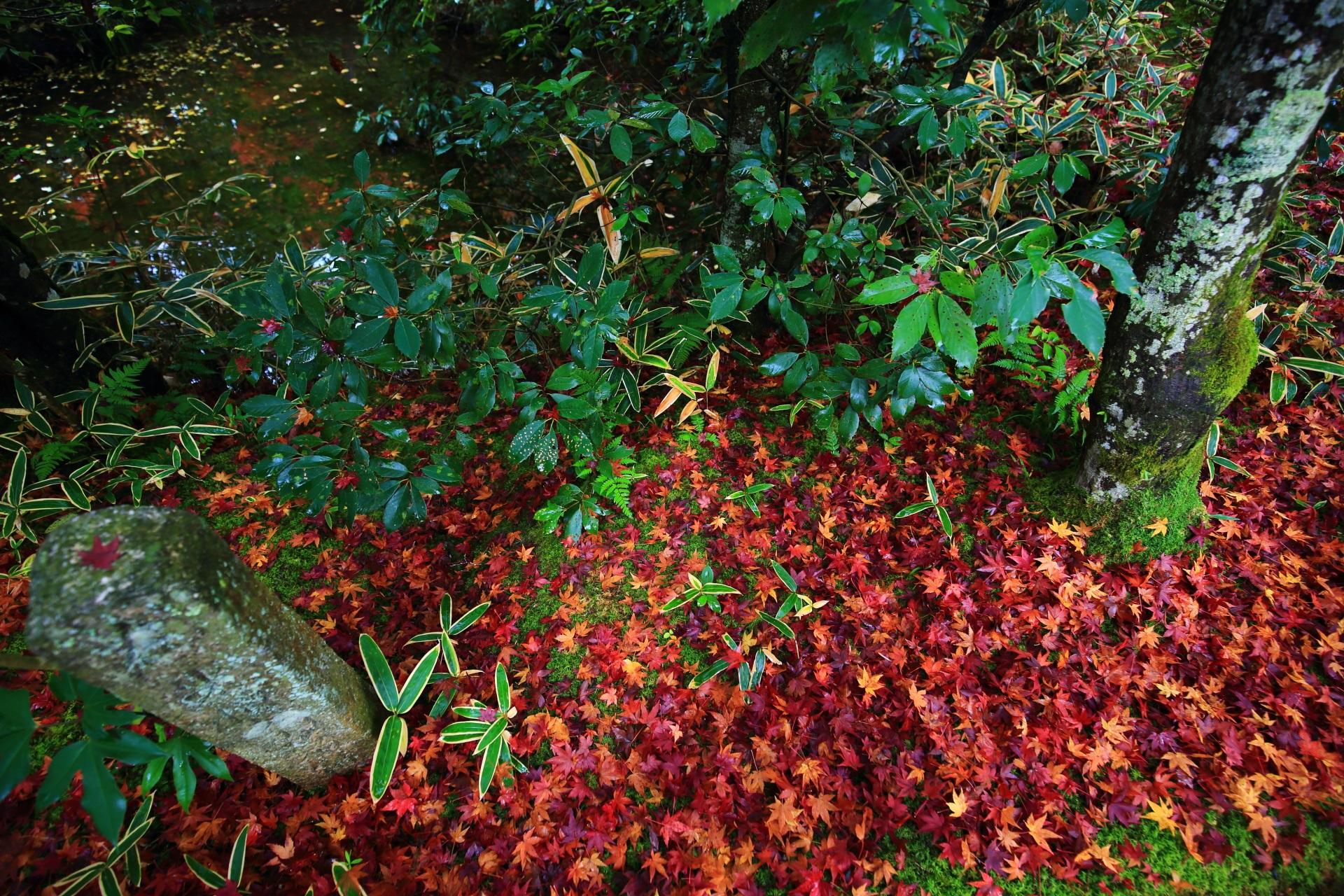 光悦寺の水辺と緑を染める散りもみじ