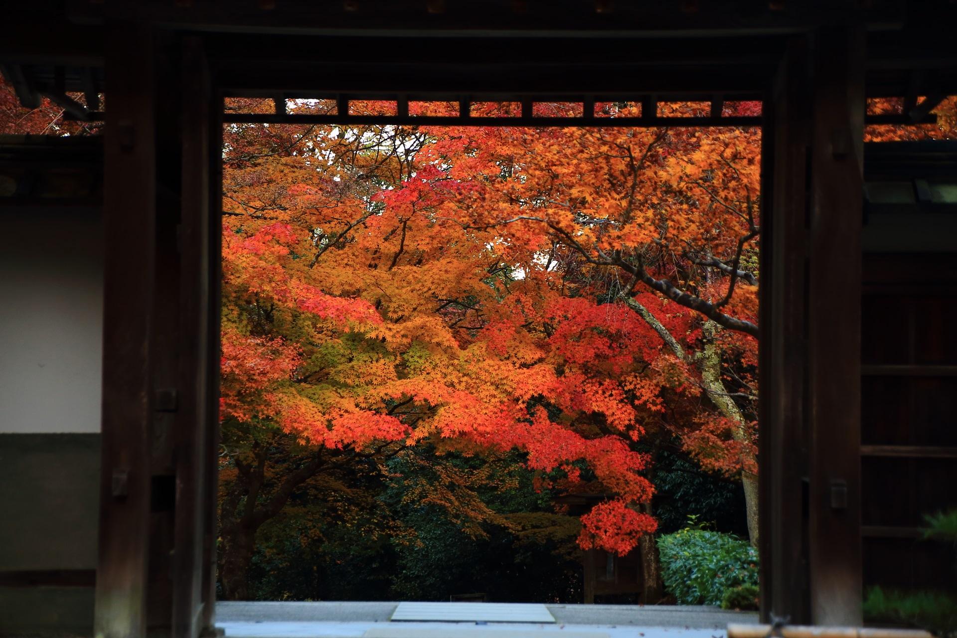 最勝院の山門から見える溢れる紅葉と参道