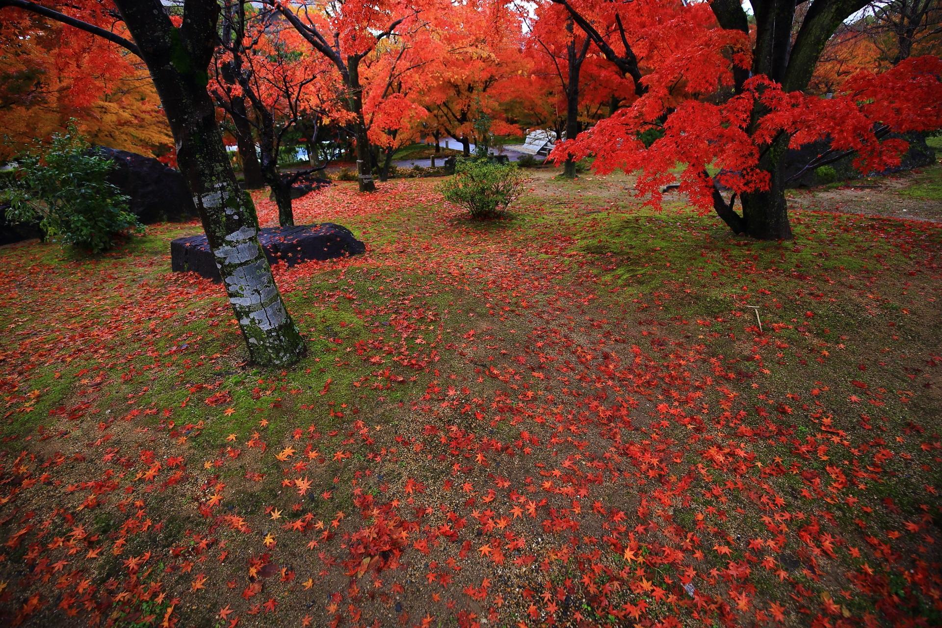 鮮やかな朱色の紅葉と散りもみじに彩られた艶やかな秋の空間