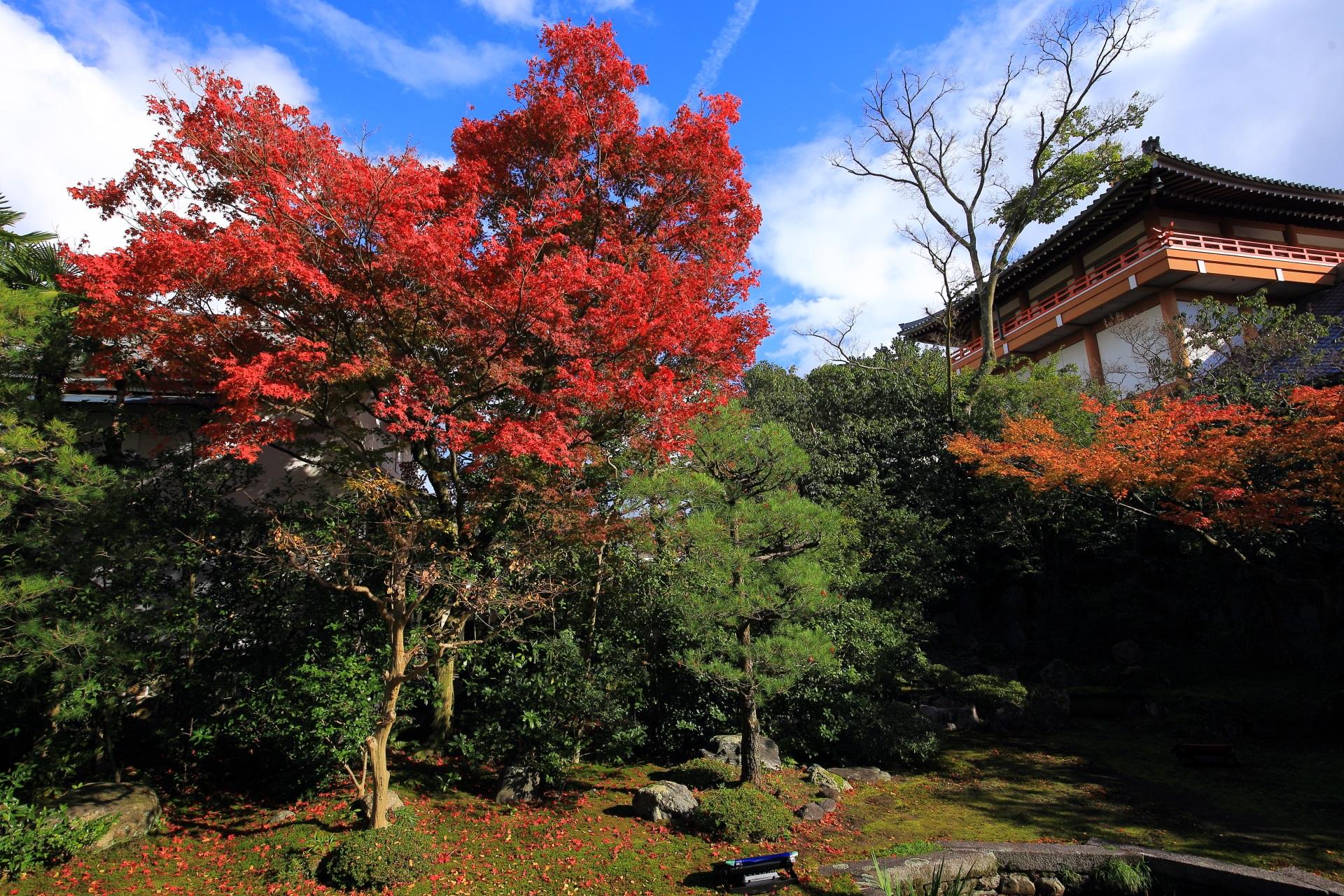 本法寺の太陽に照らされる炎のような輝く赤い紅葉と秋の庭園