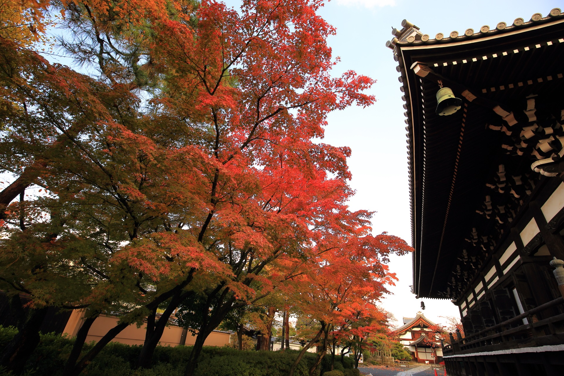 妙顕寺の本堂横の溢れる紅葉