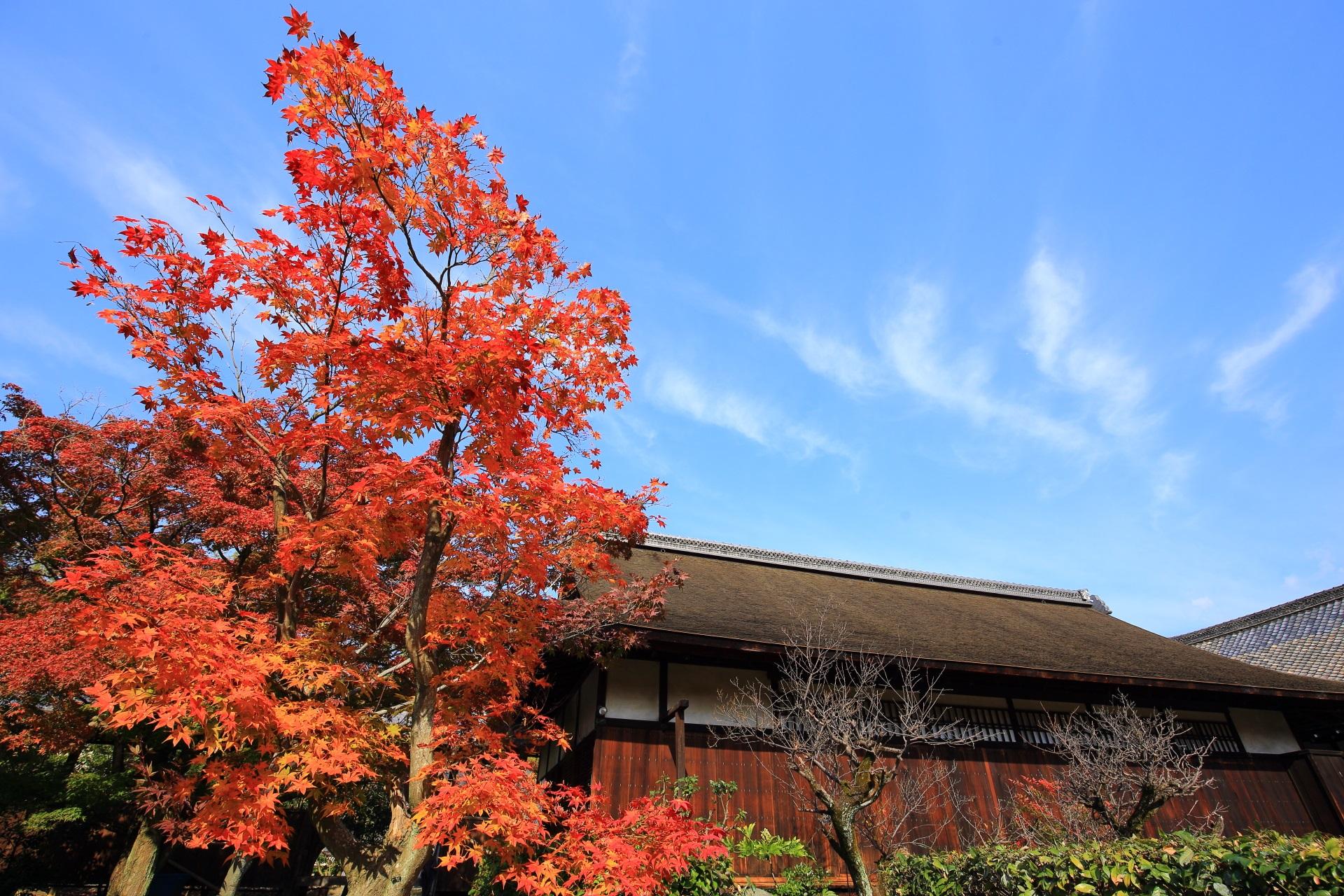 書院前の青空に映える鮮やかな紅葉