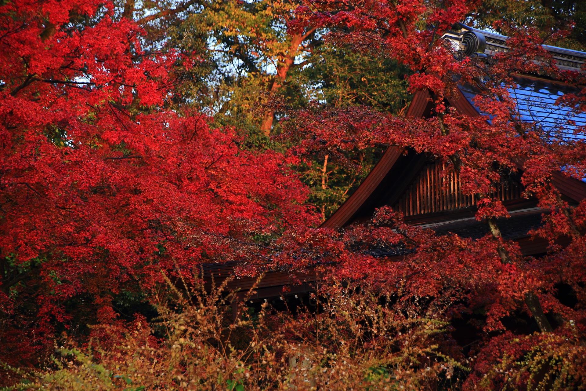 拝殿を染める燃えるような真っ赤な紅葉