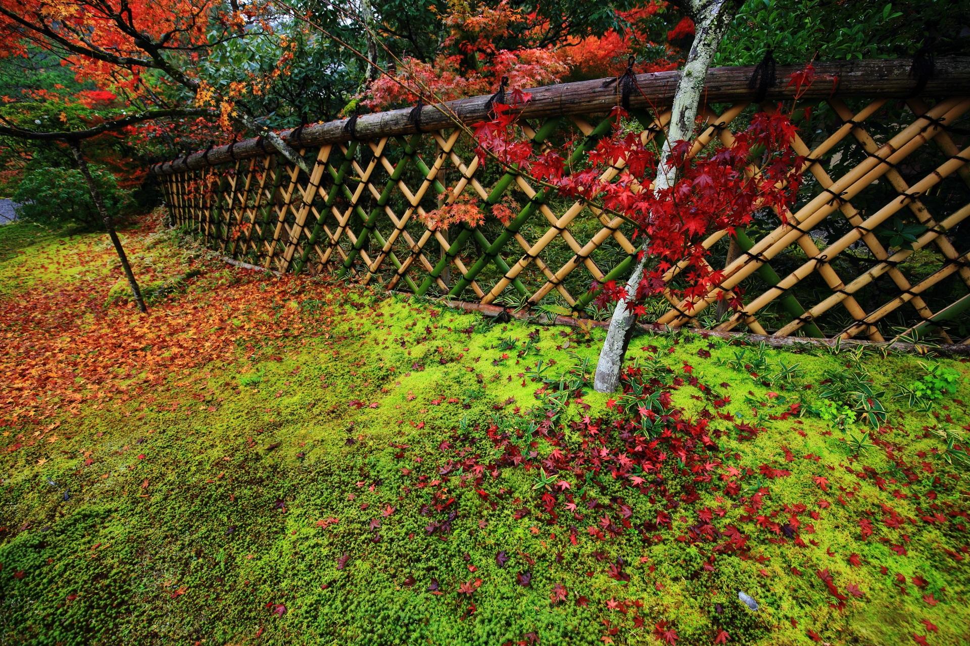 苔を染める鮮烈な色合いの赤い散りもみじ