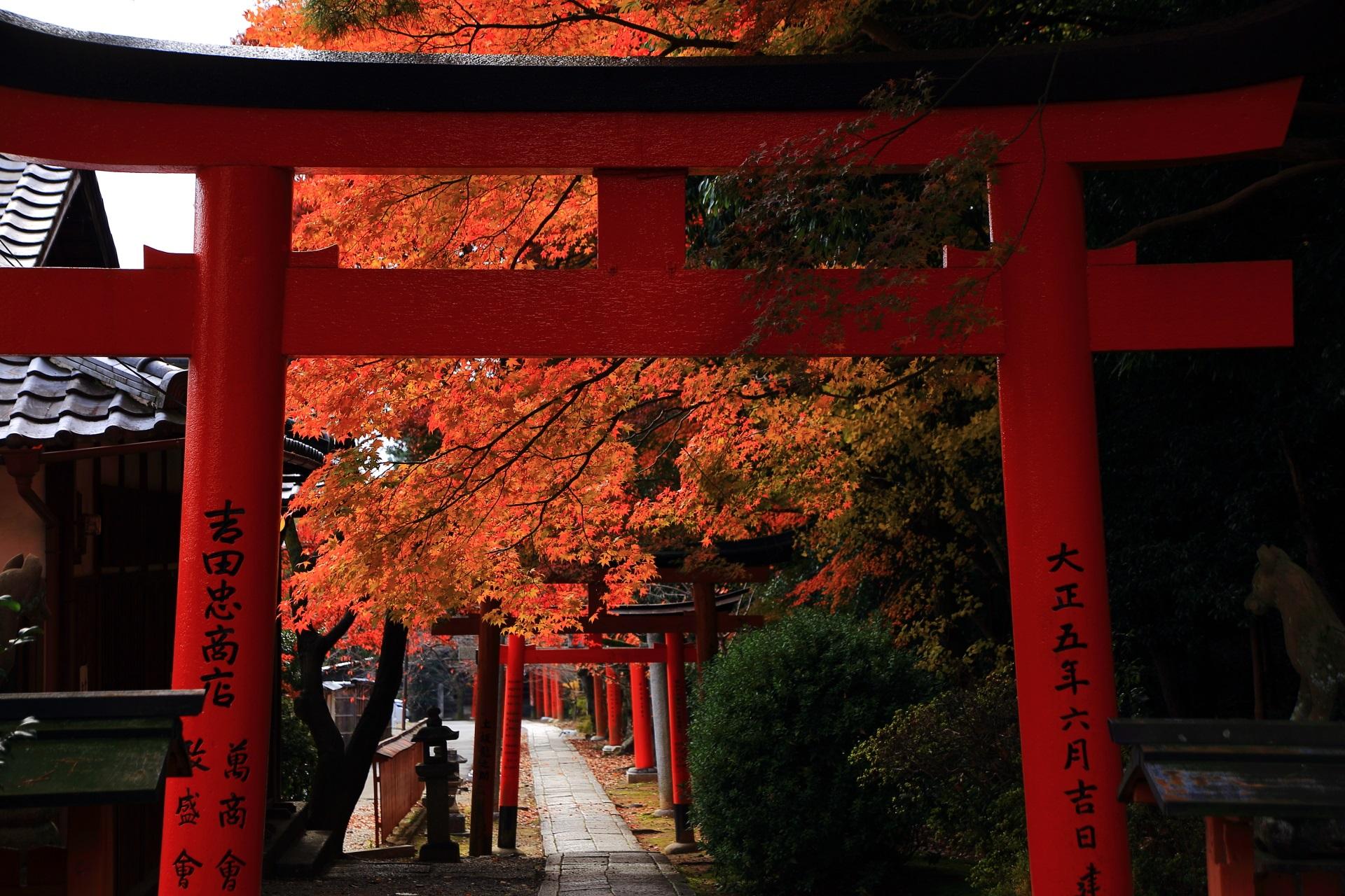 竹中稲荷神社の拝殿側から眺めた鳥居と紅葉