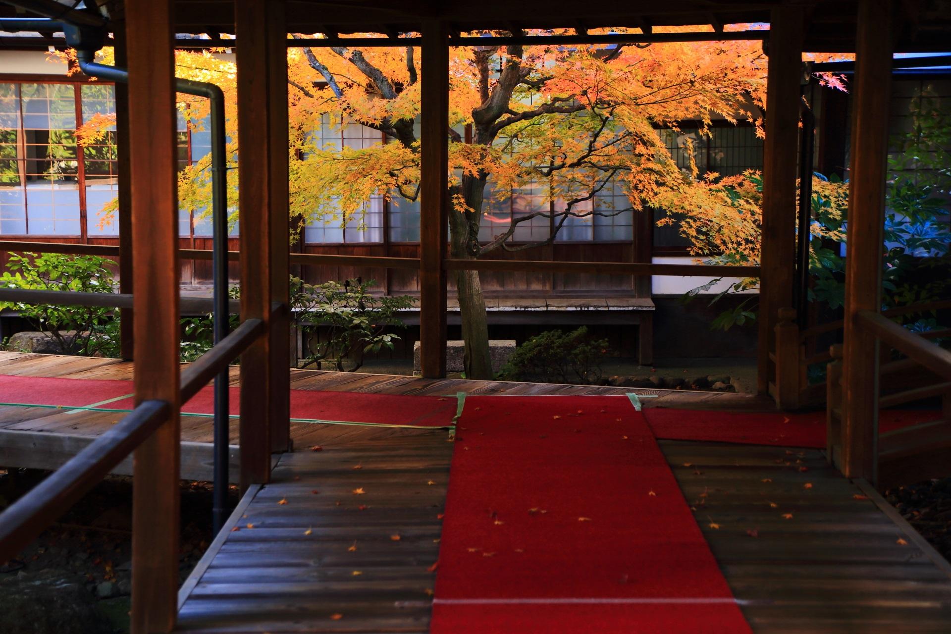 本法寺の絵になる回廊の先の色づく紅葉