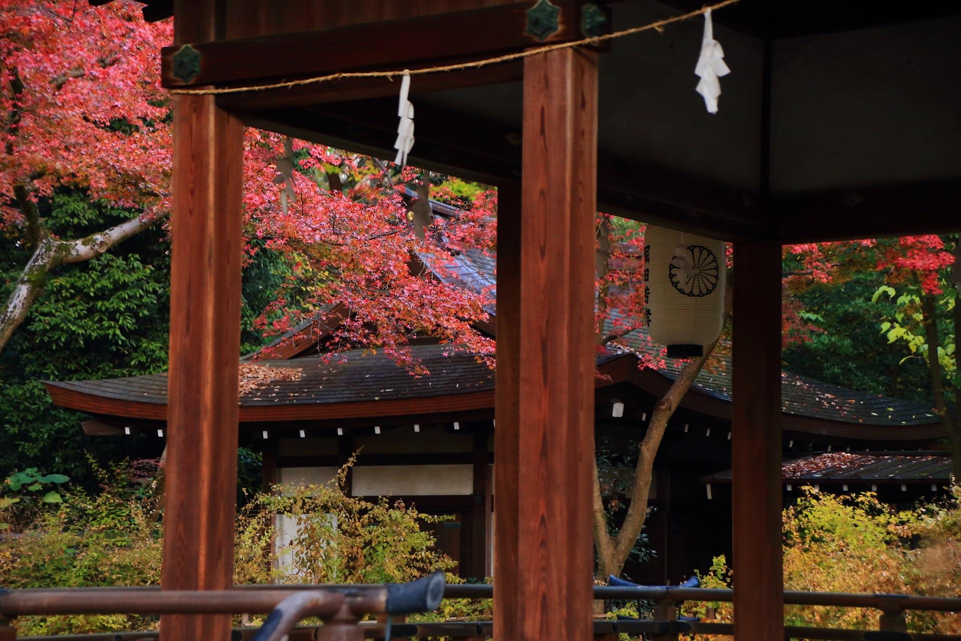 拝殿越しに眺めた静かに色づく赤い紅葉