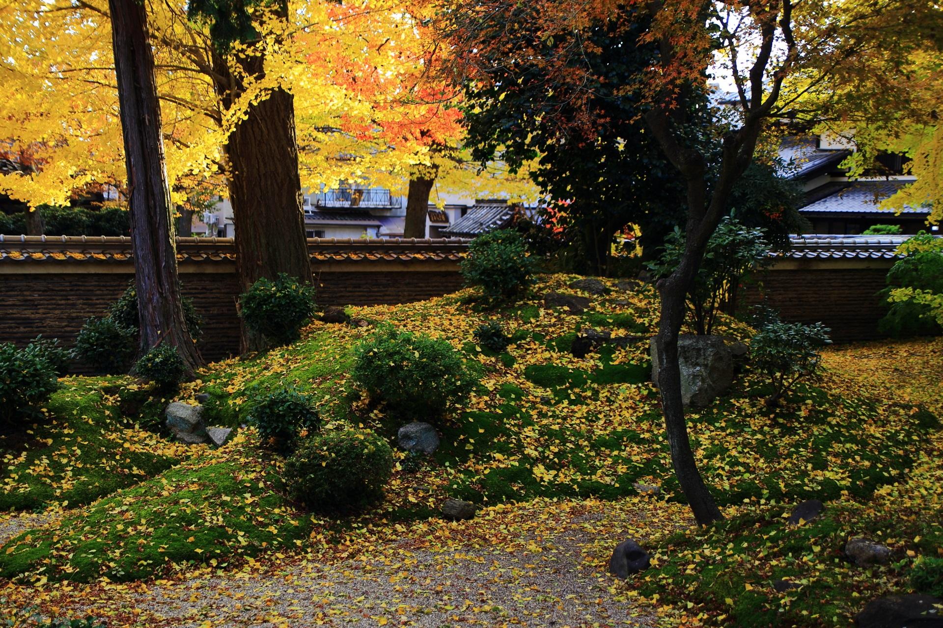 立本寺の夕陽を浴びて煌く銀杏