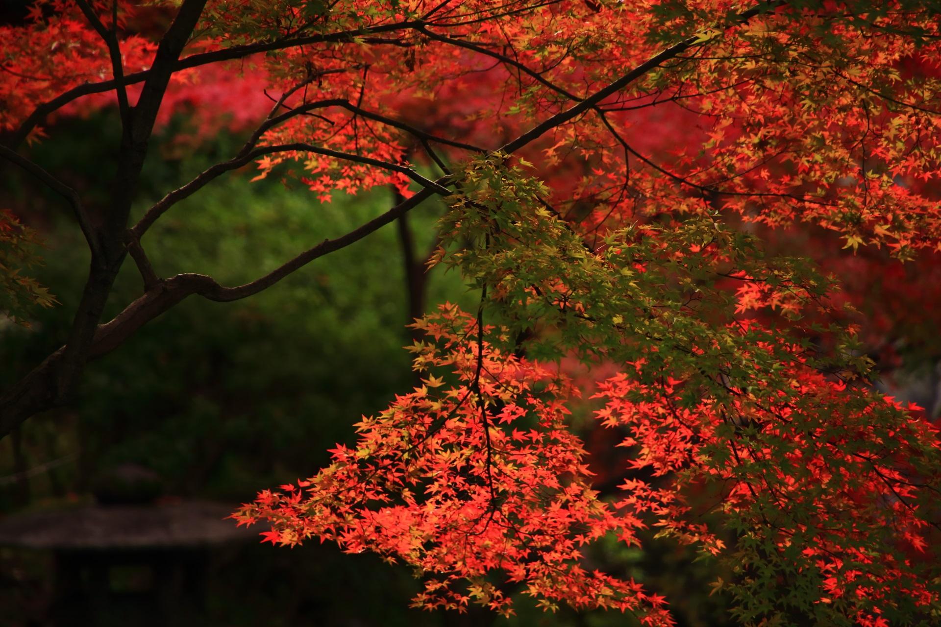 大谷本廟の皓月池の上で華やかに煌く紅葉